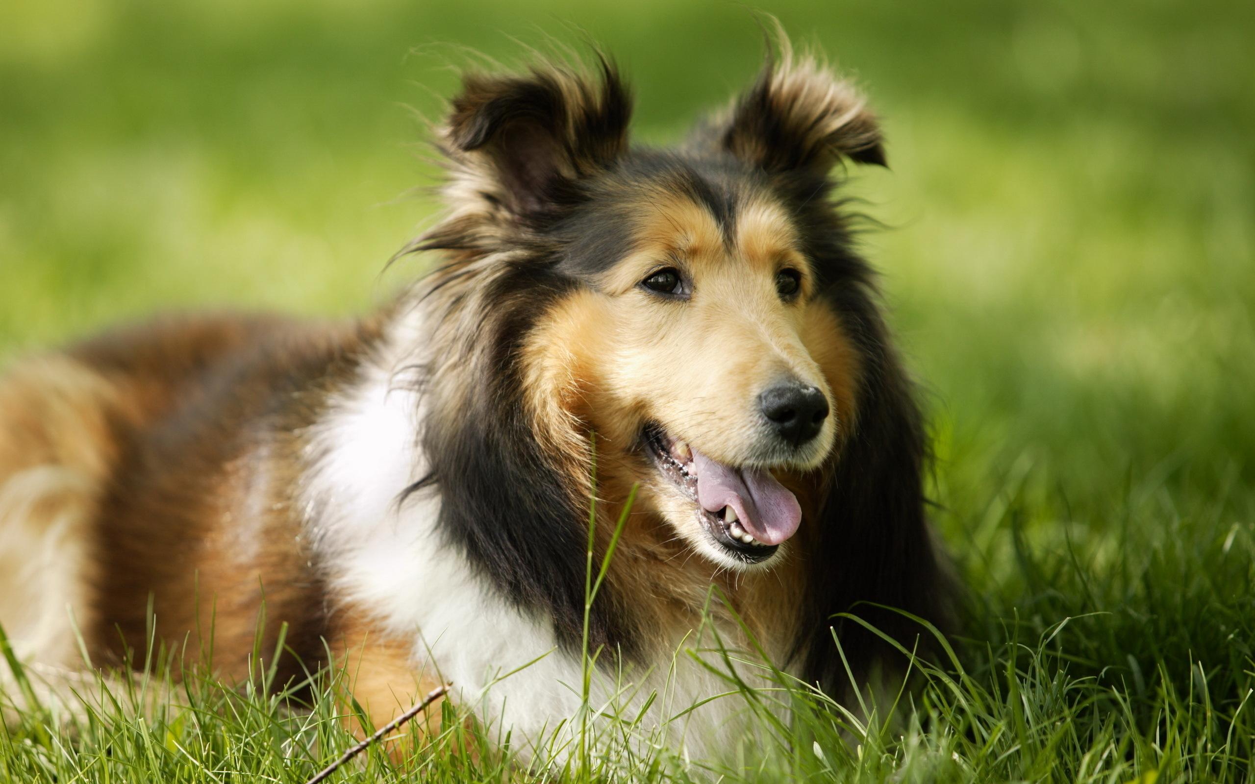 самые красивые картинки всех собак аллеи тонких