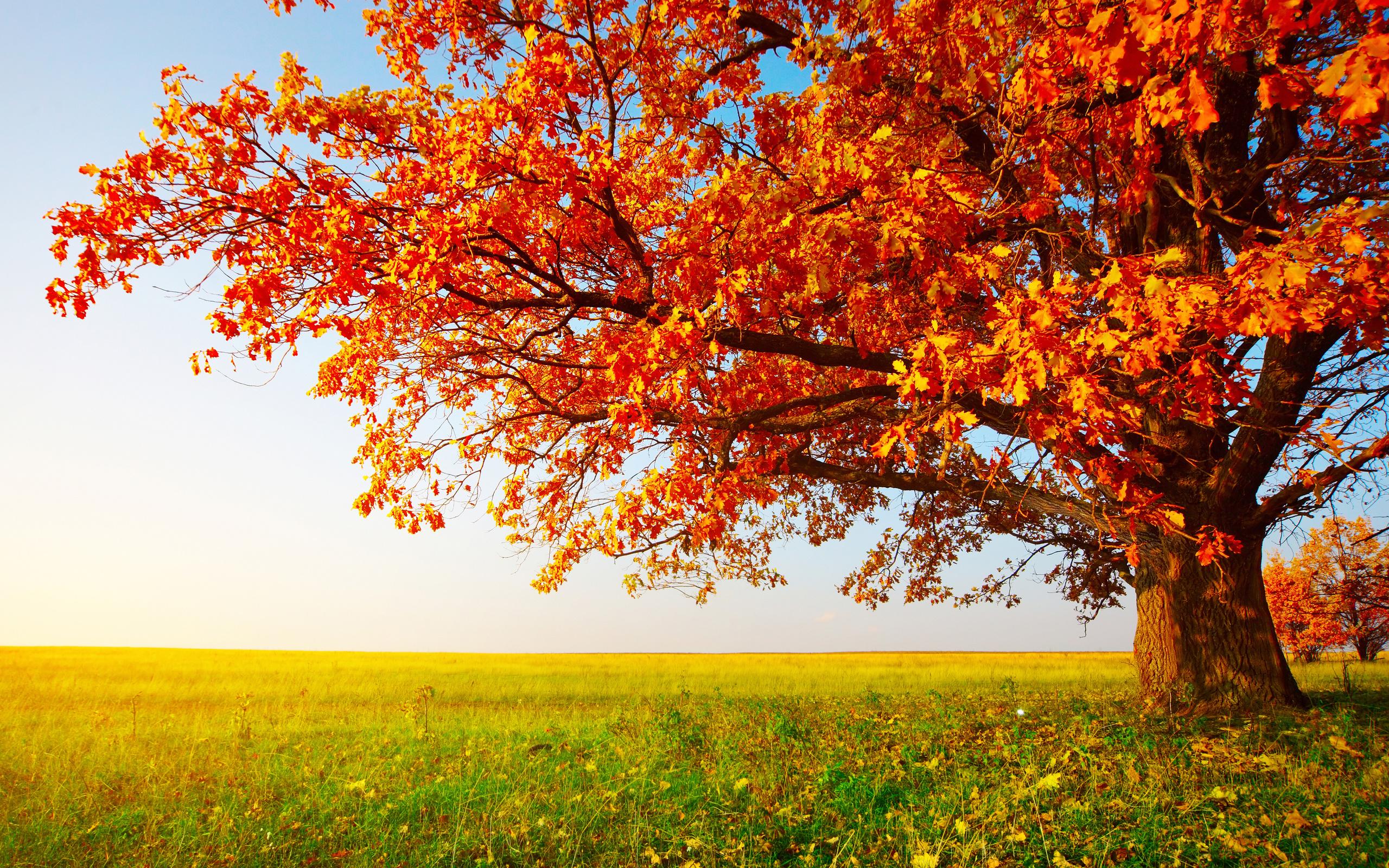 счастью, картинки про осень большие горб