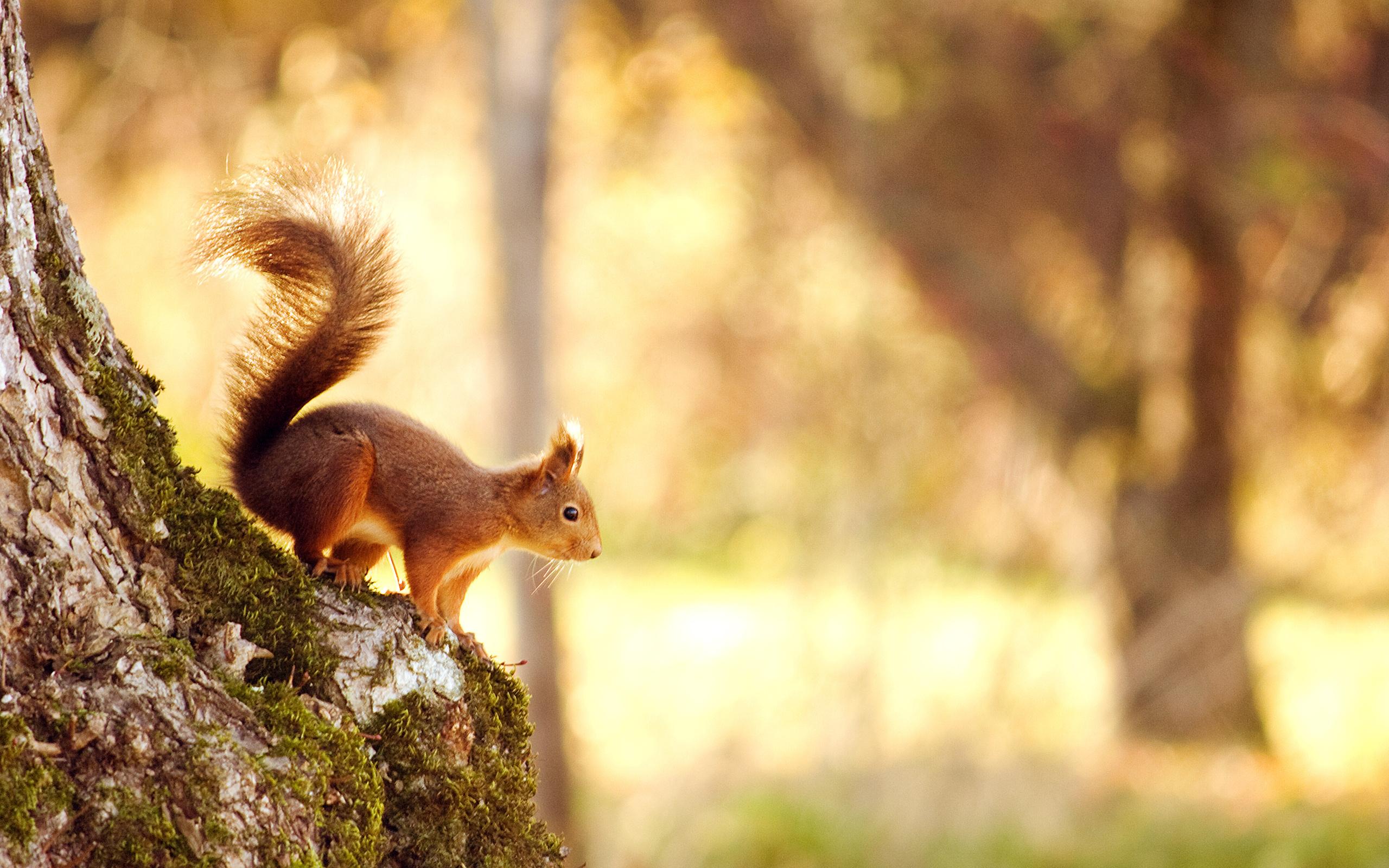 Картинки красивые про природу с животными, тему спасибо