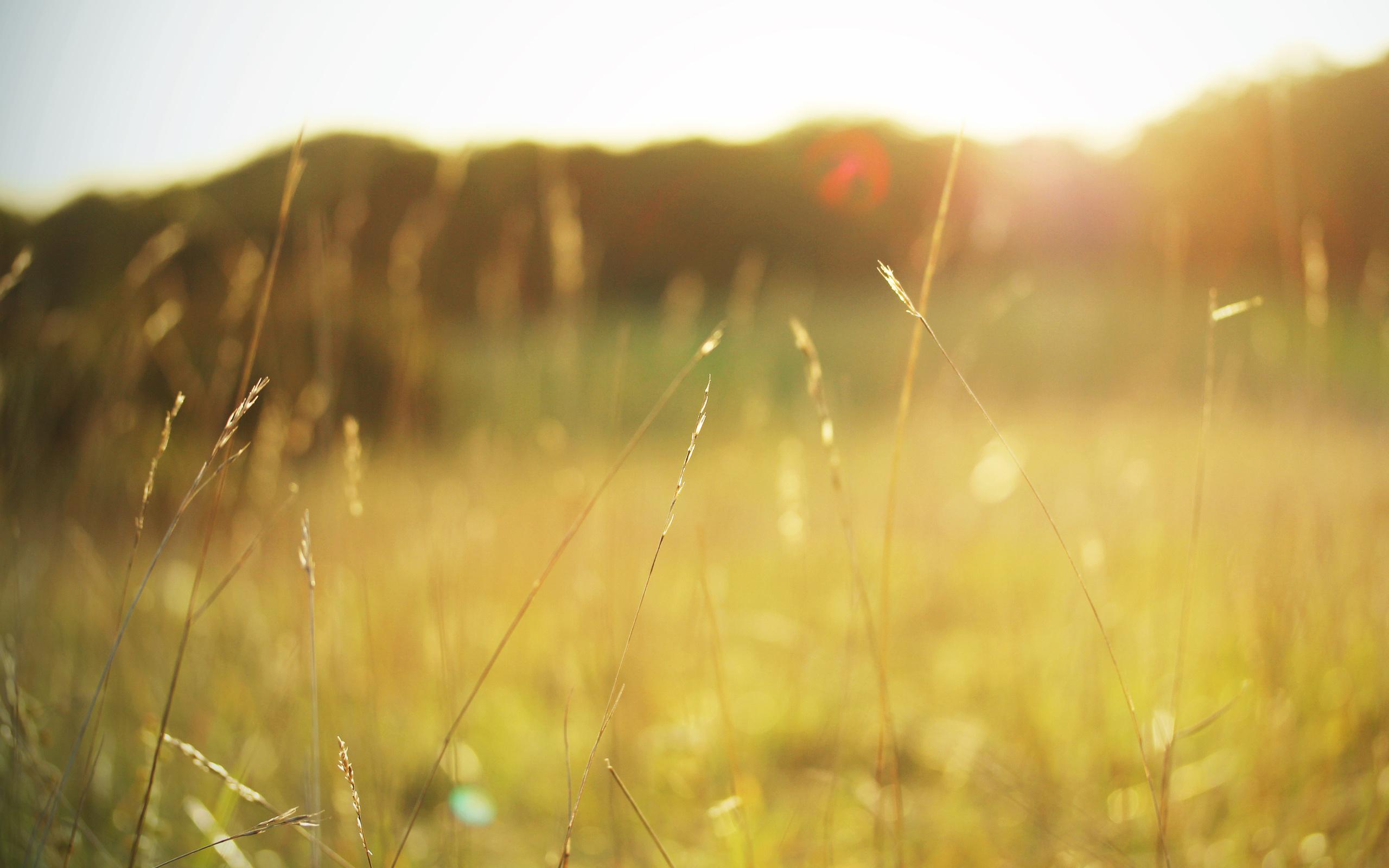 лето трава солнце картинки этом году них