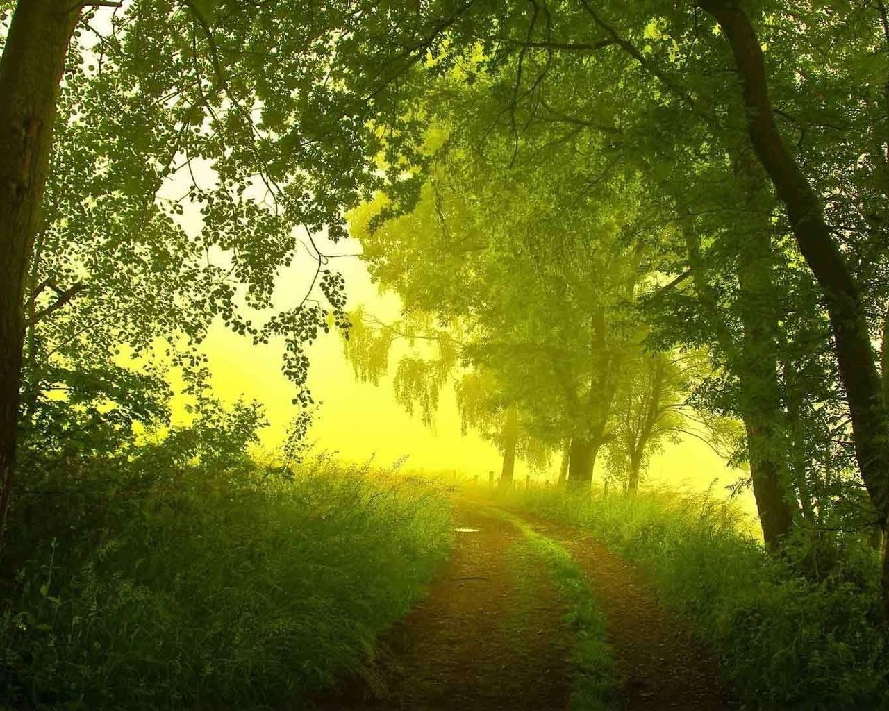 лес летним утром картинки слой