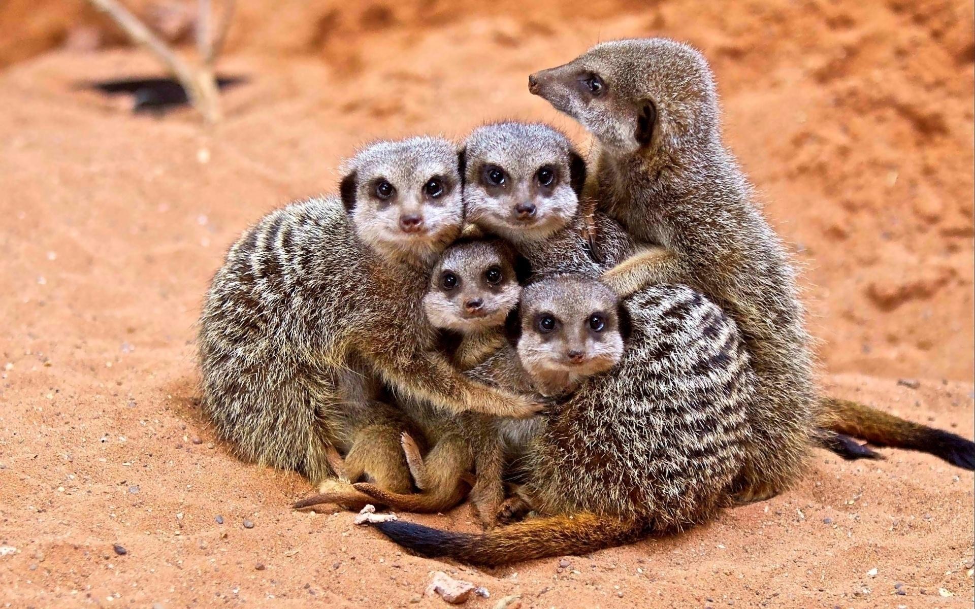 Днем, прикольная картинка группы животных