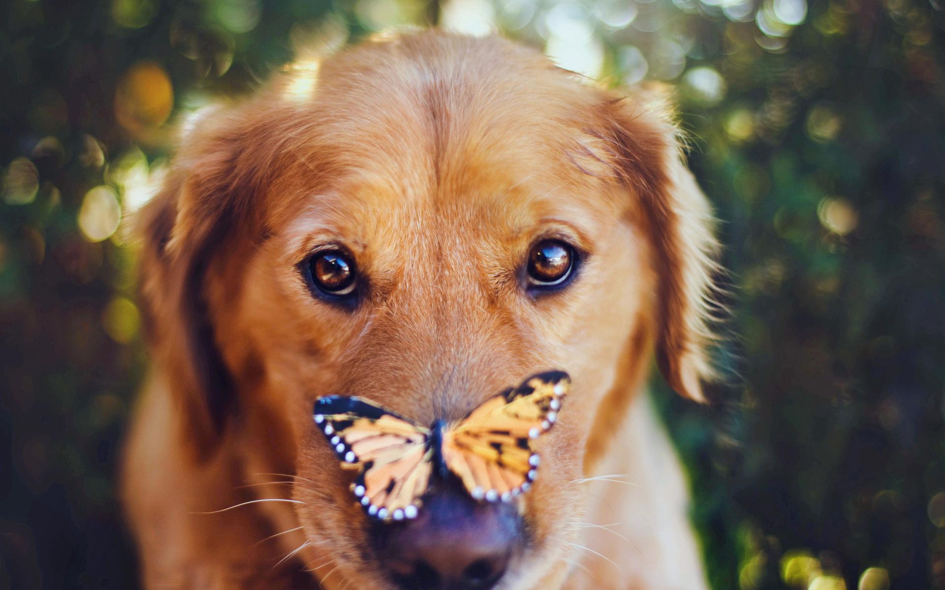 Прикольные картинки на телефон с собачками