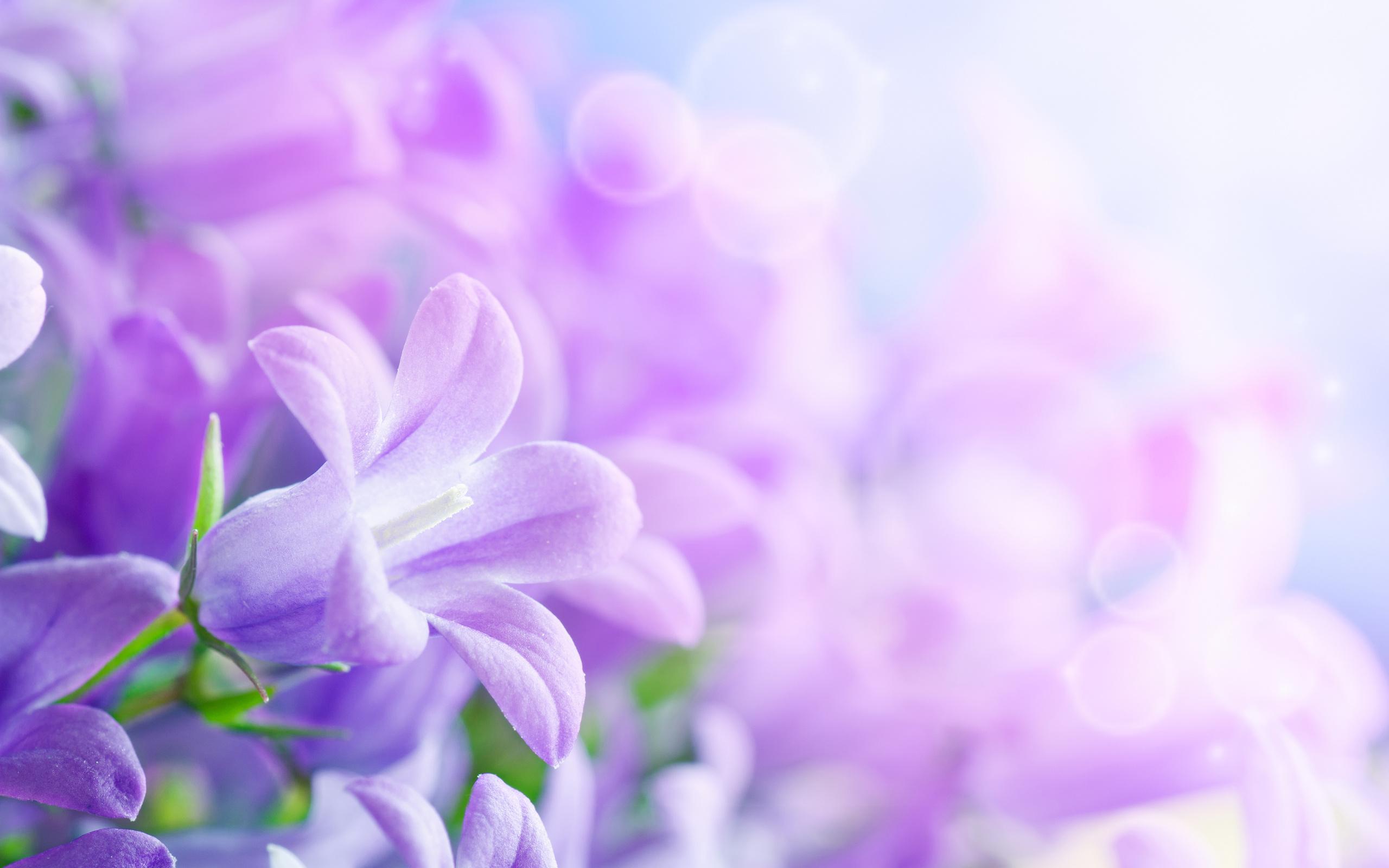 Фон открытка цветы