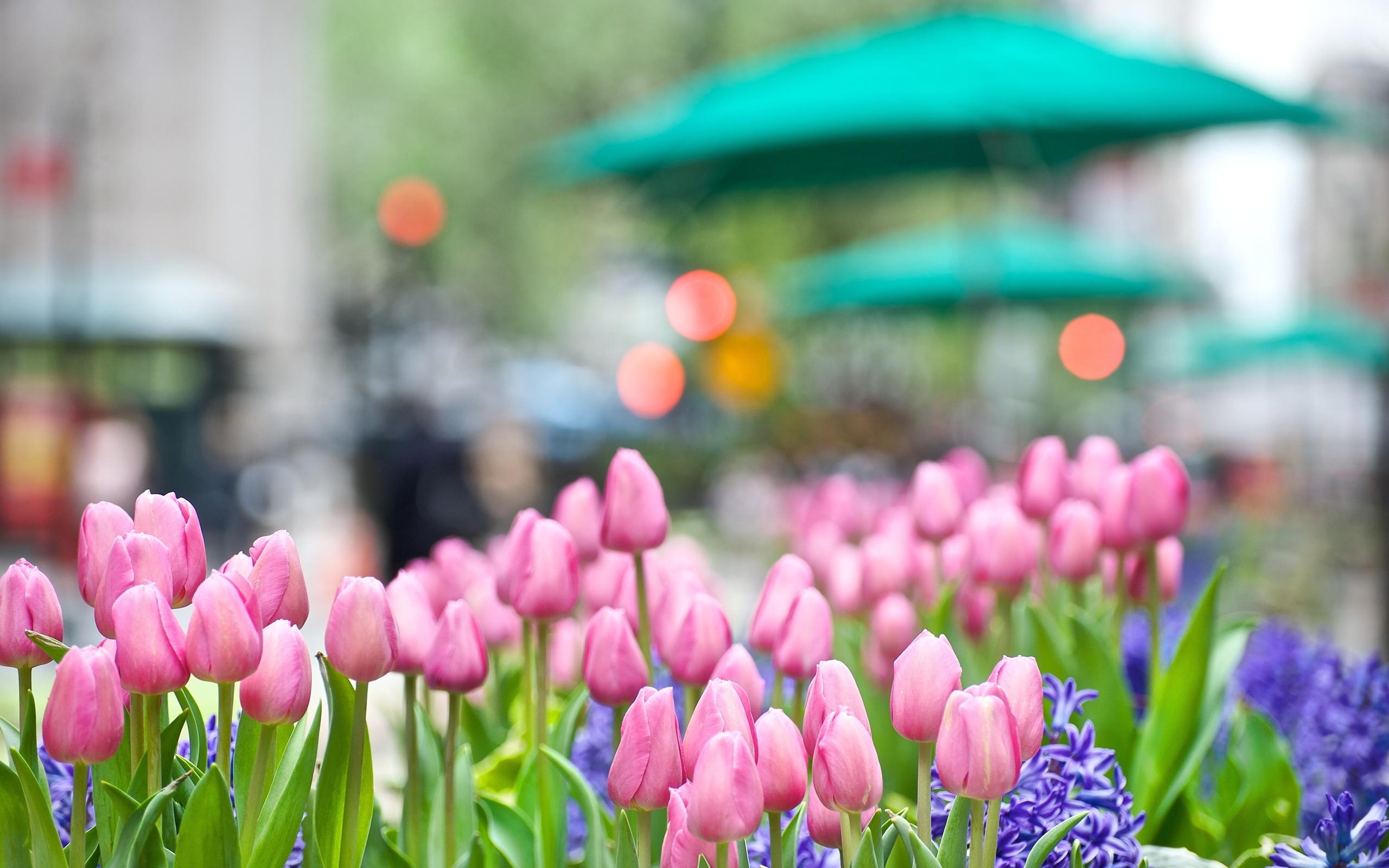 Красивые картинки о весне для обоев