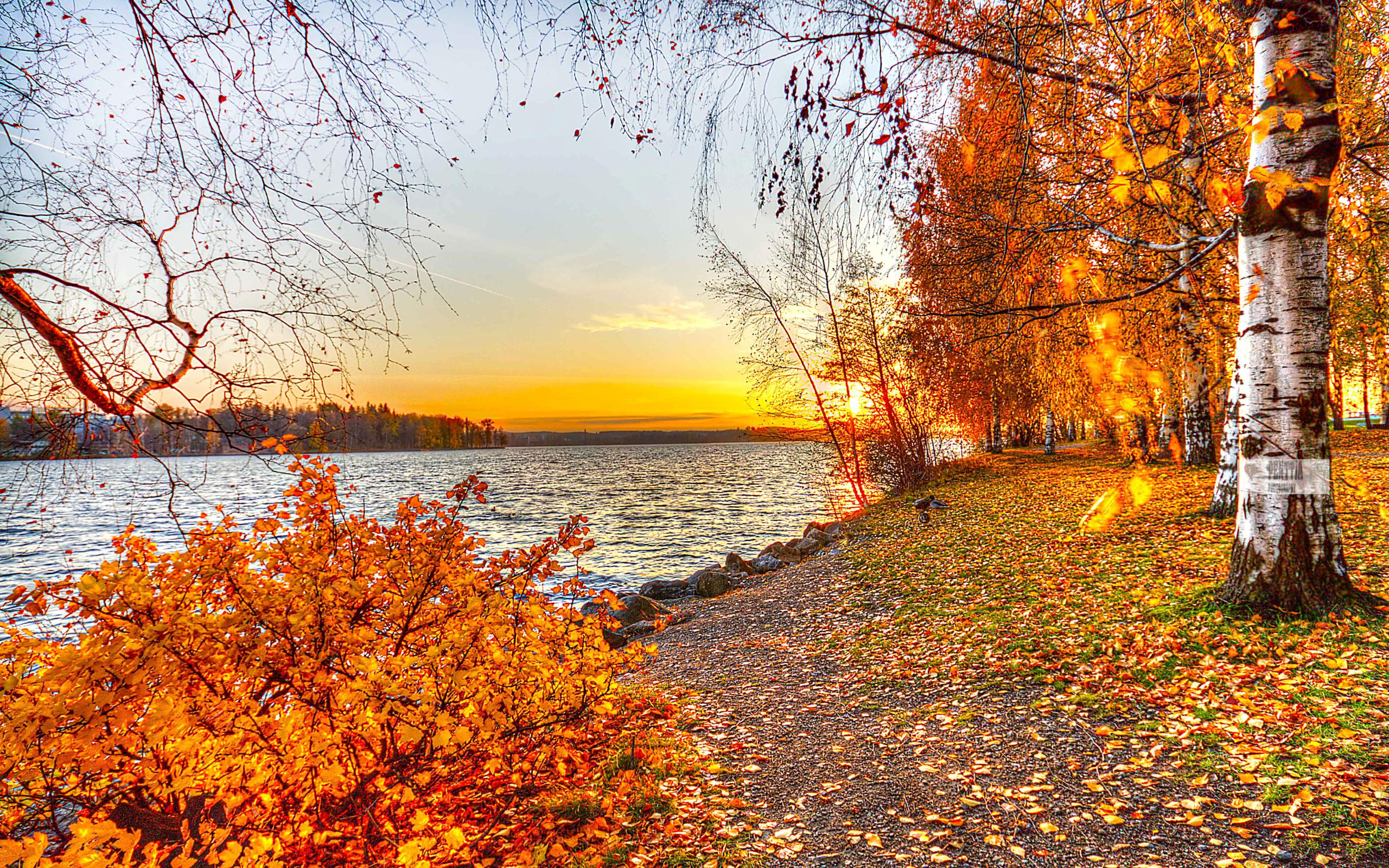 Осень природа открытки