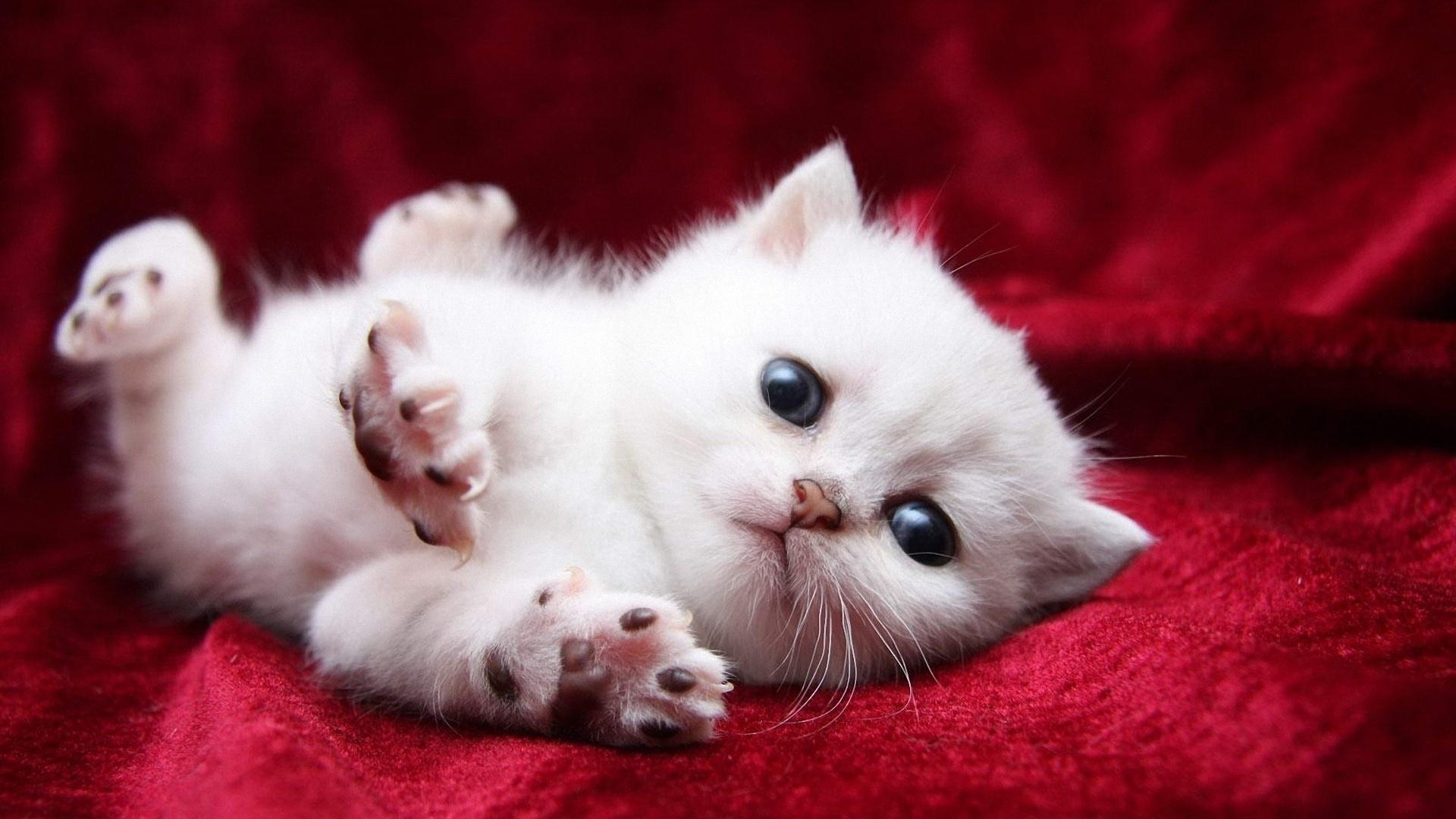 милые картинки с кошками пожалуйста т?рмыс-салтты? ?згеруіне ?арай
