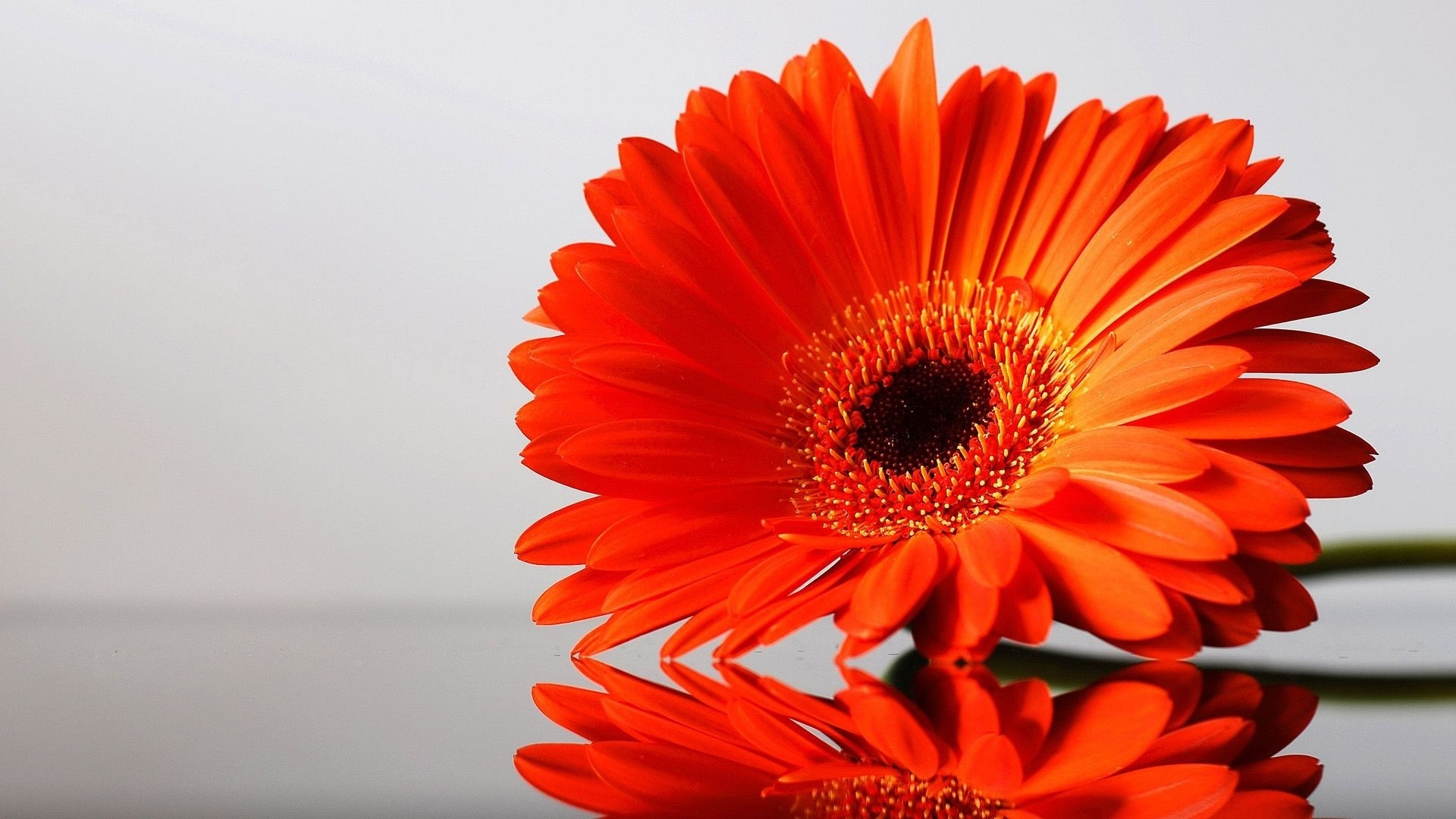Яркие открытки цветы