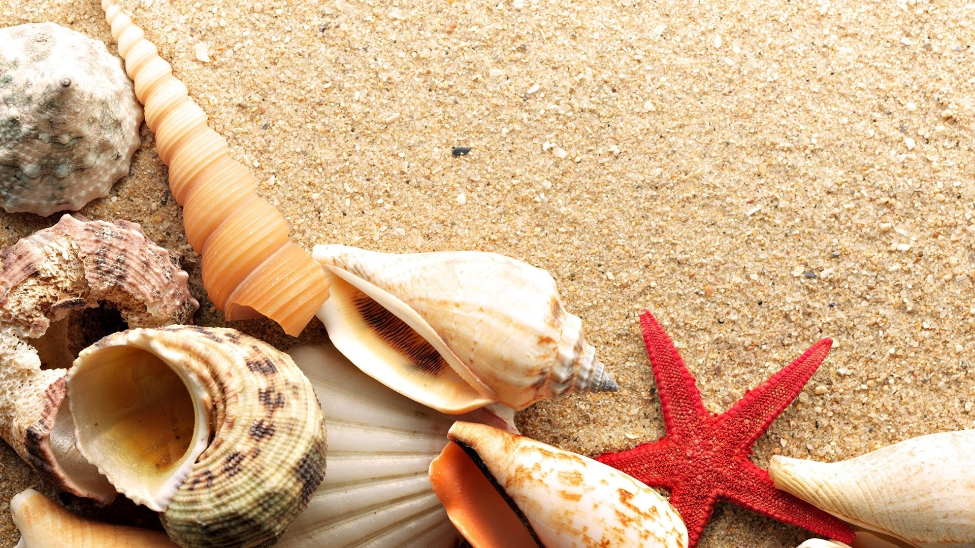 Бумаги открытки, картинки ракушки на песке
