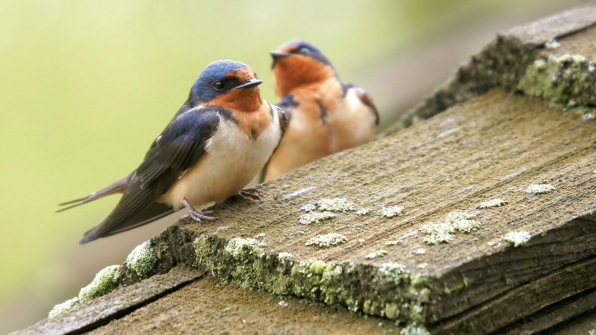 правильно птицы картинки широкоформатные между разновидностями размерах