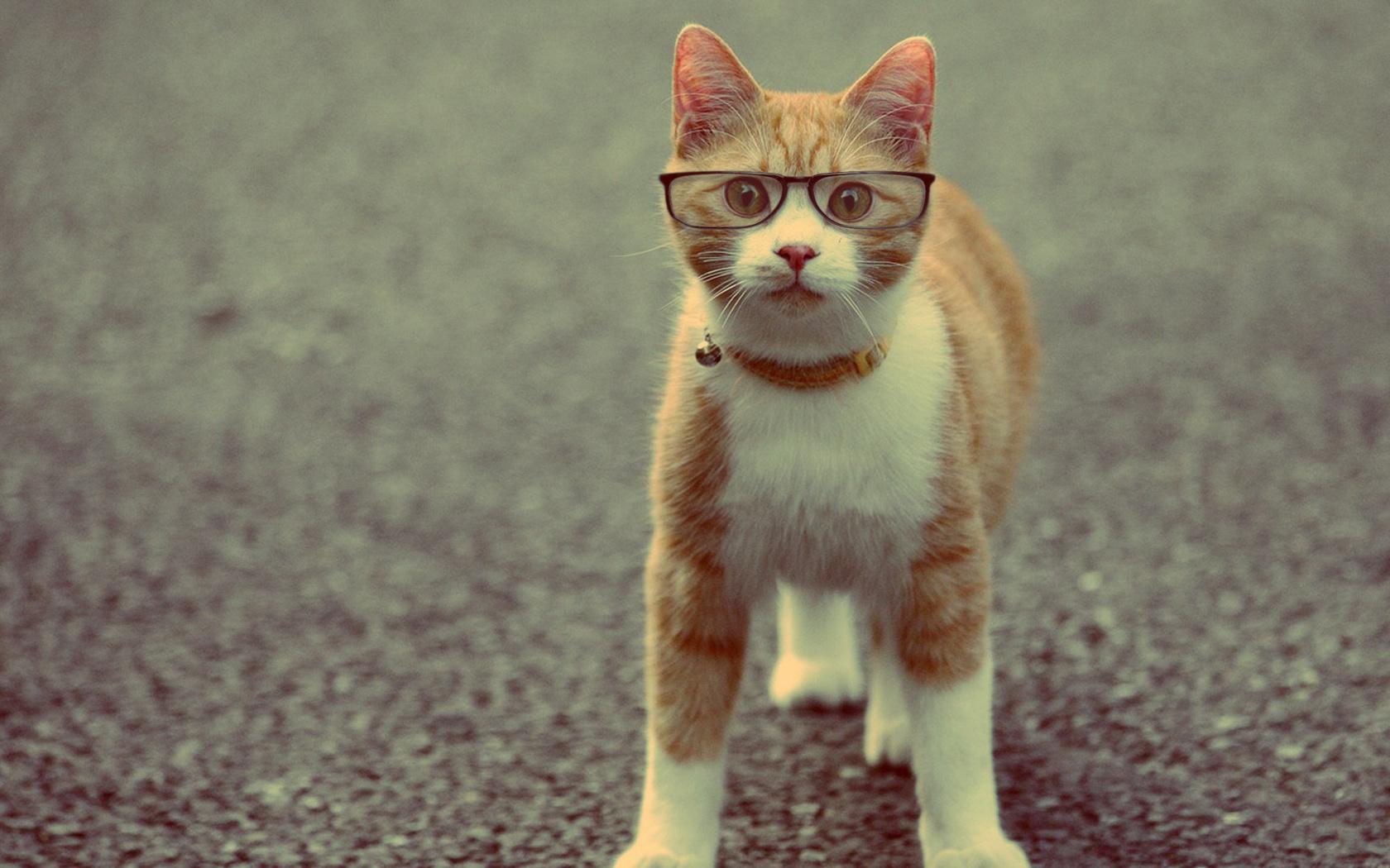 Позитивные картинки с котами, день рождение