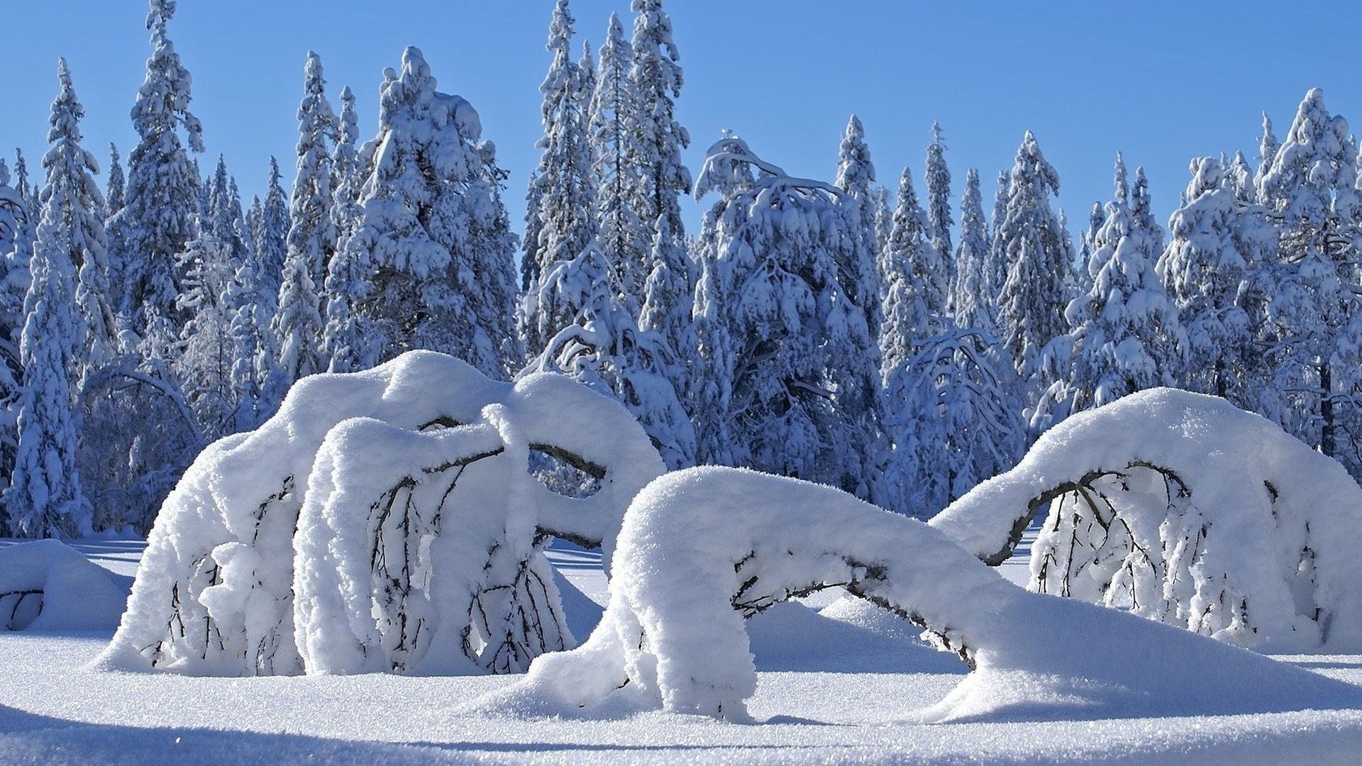 снежная красота в картинках вкусное мясо можно