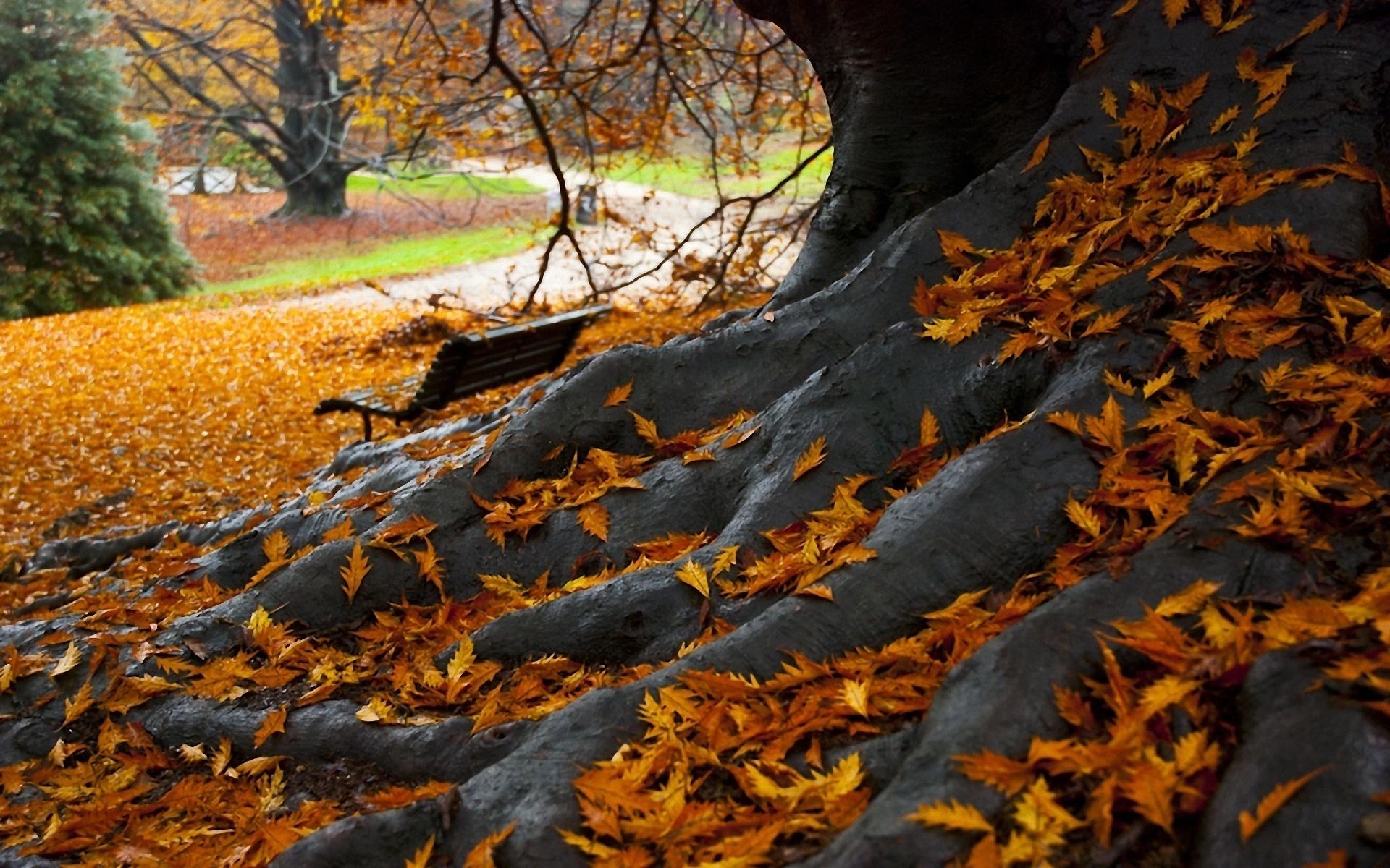 Удивительные картинки осень