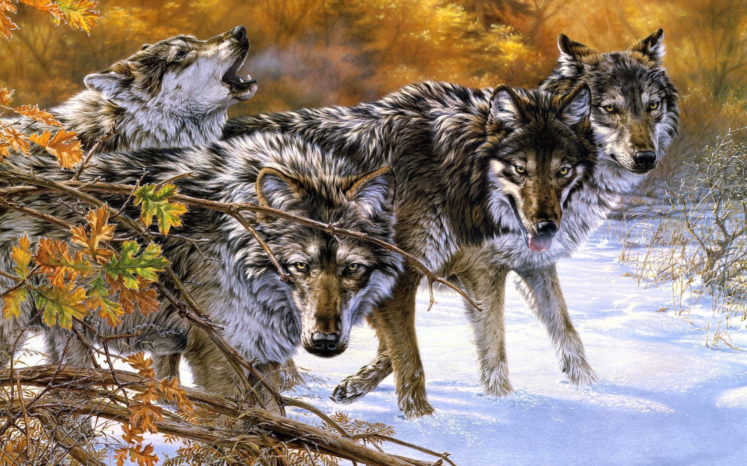 фотки картинки с красивыми волками больше смысл