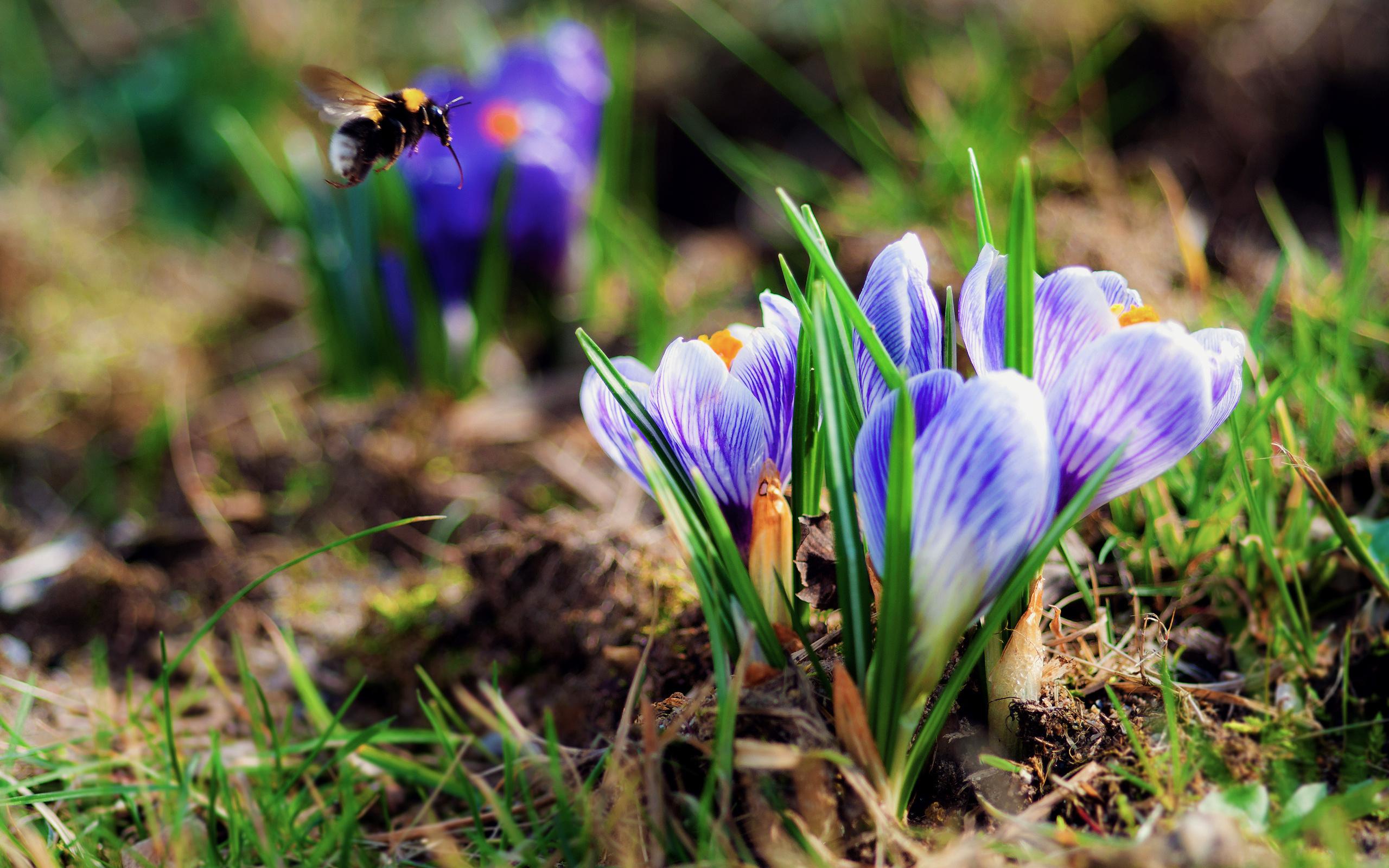 Красивый картинки о весне