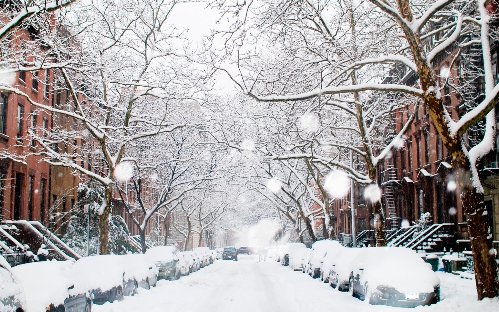 Все картинки зимы в городе того, птица
