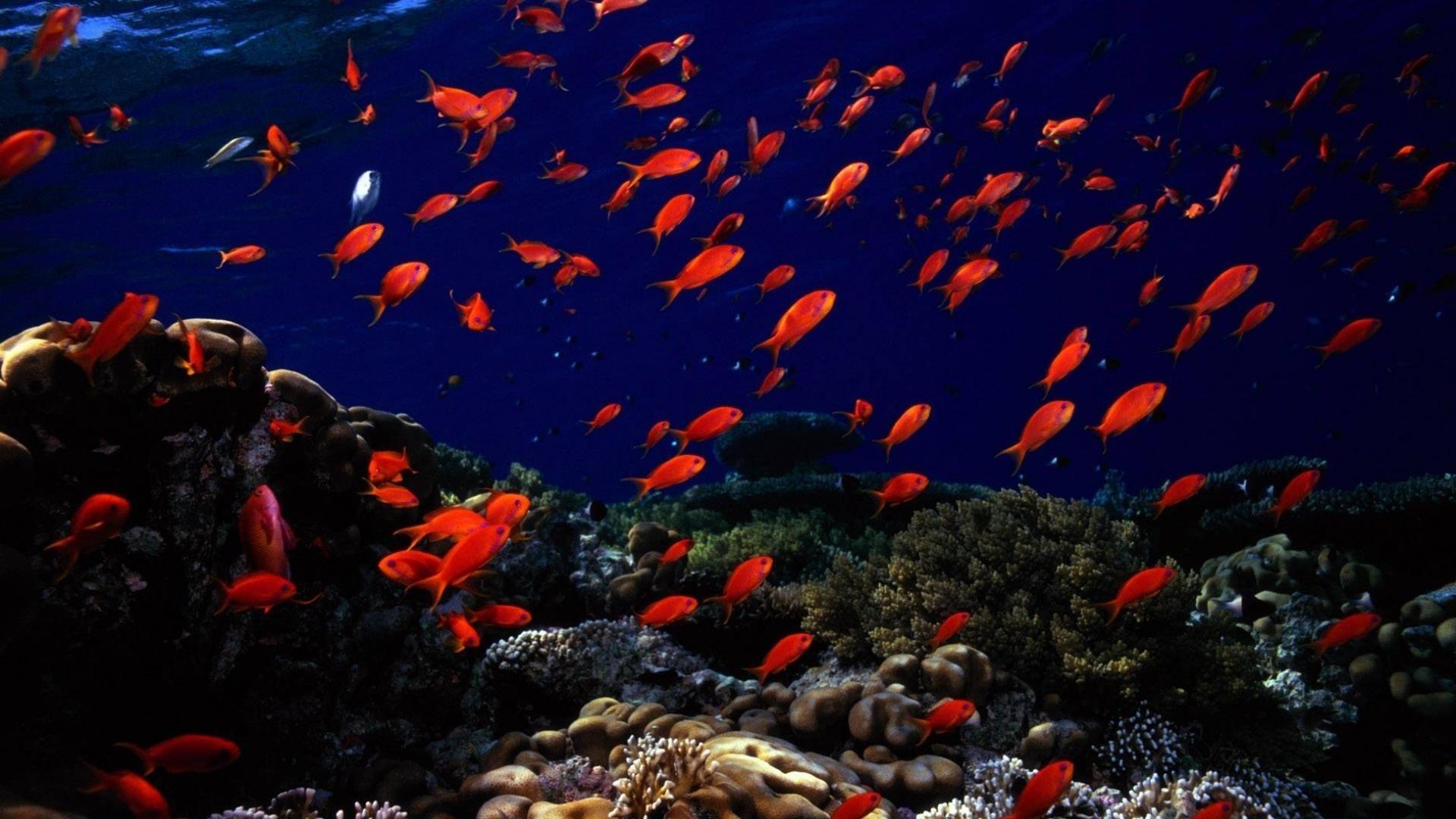 покрытие картинки на рабочий стол подводный мир океана своими