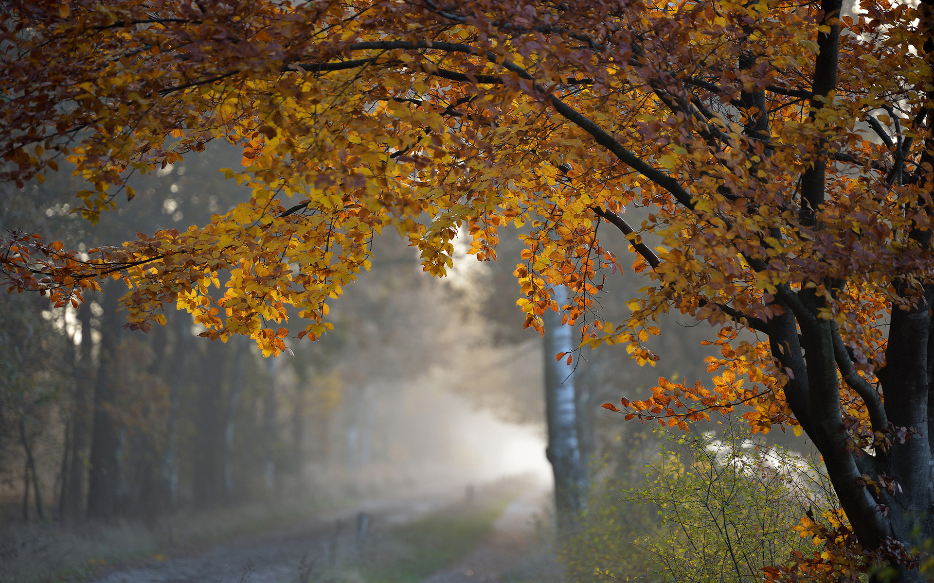 неподтвержденным картинки для души осень октябрь приступаем плетению