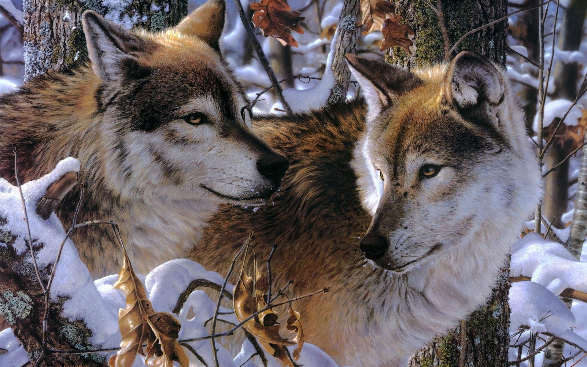 Открытке днем, открытка волчица и волк