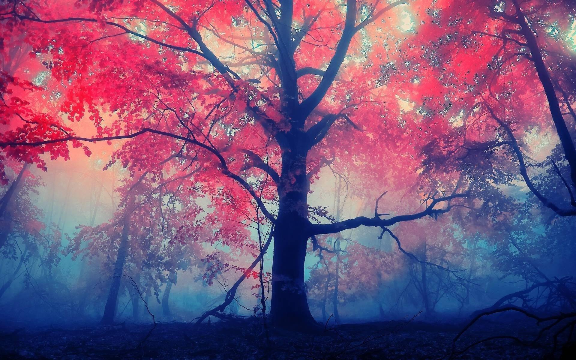 красный лес рисунок дорогой