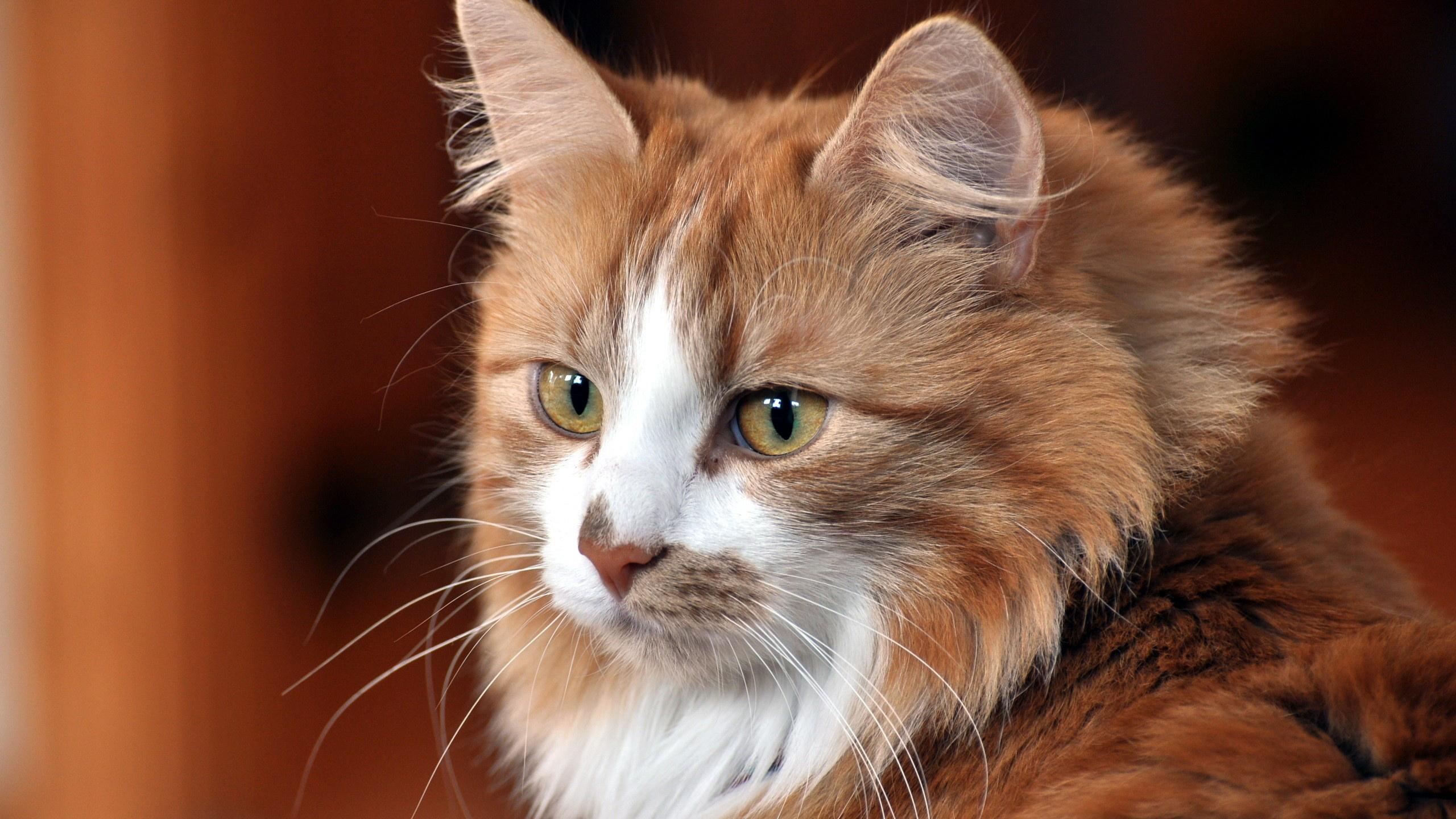Картинка кошки фото