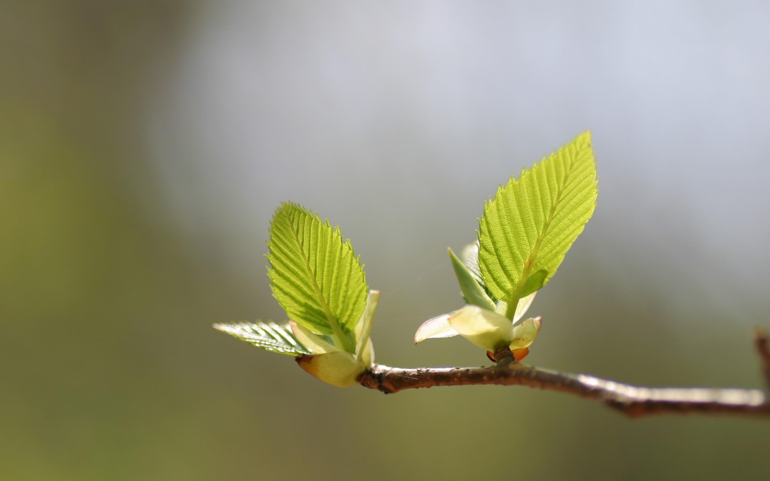 Картинка лист весенний