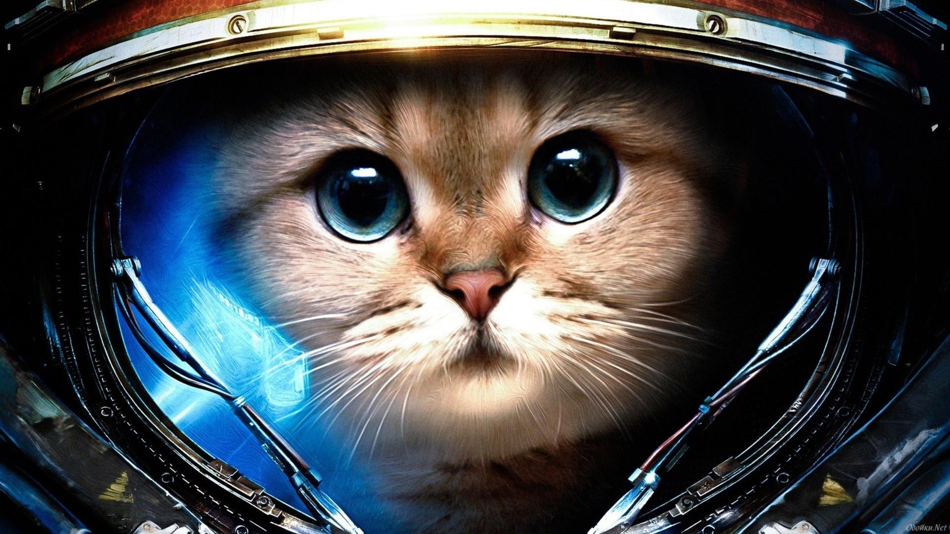 картинки животных в космосе помощью