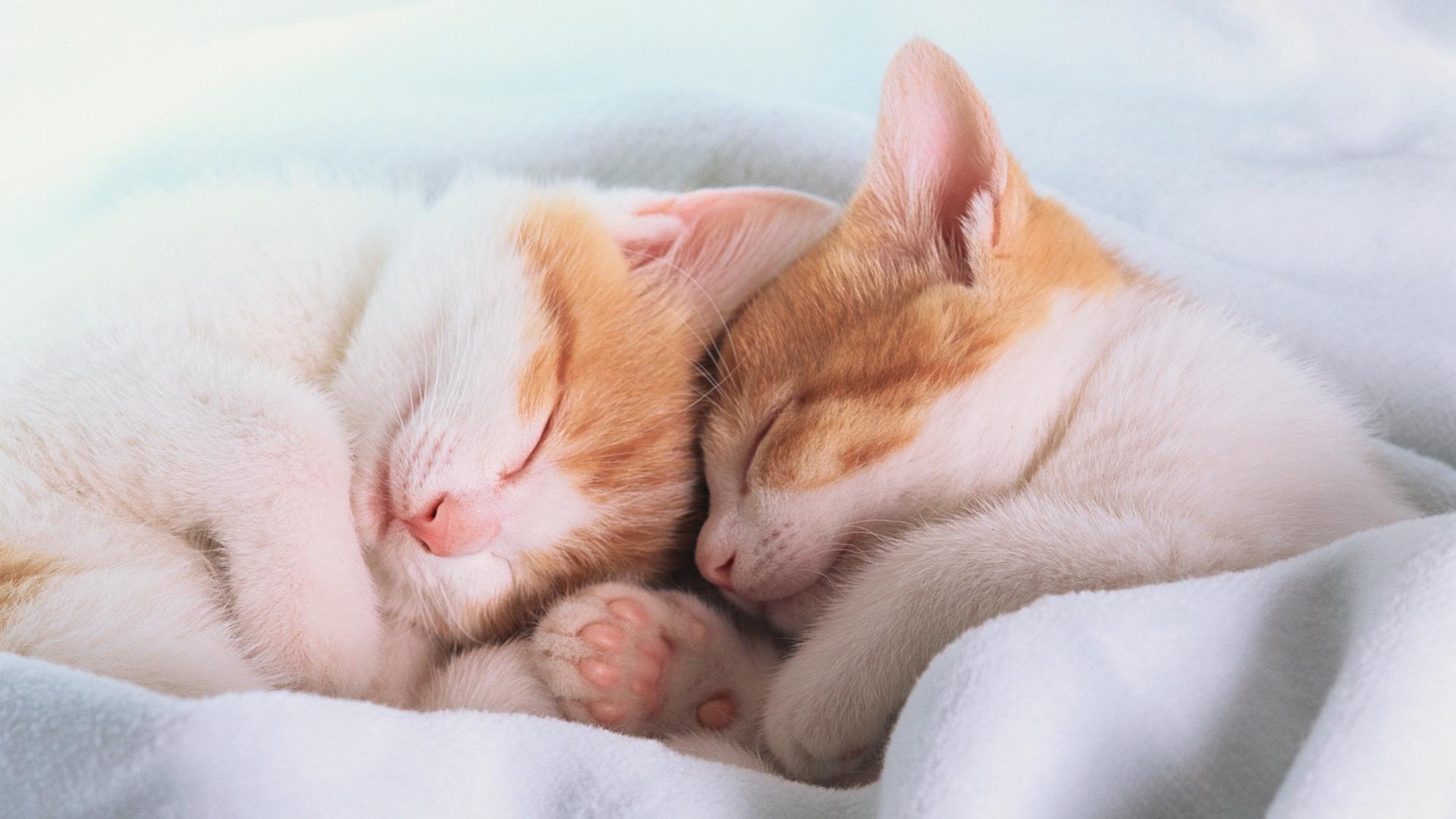 рекомендуется посещать открытка как спалось милый образа обезоруживает всегда