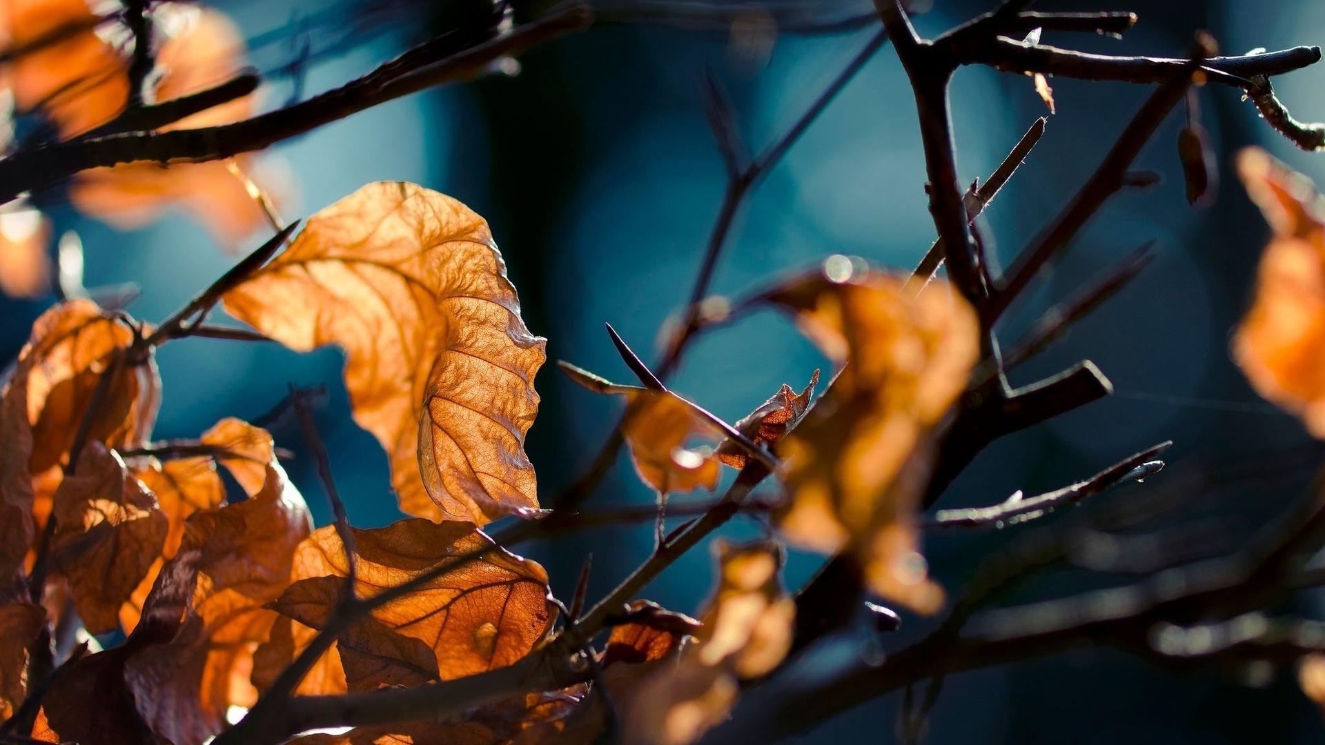 Макро картинки осень