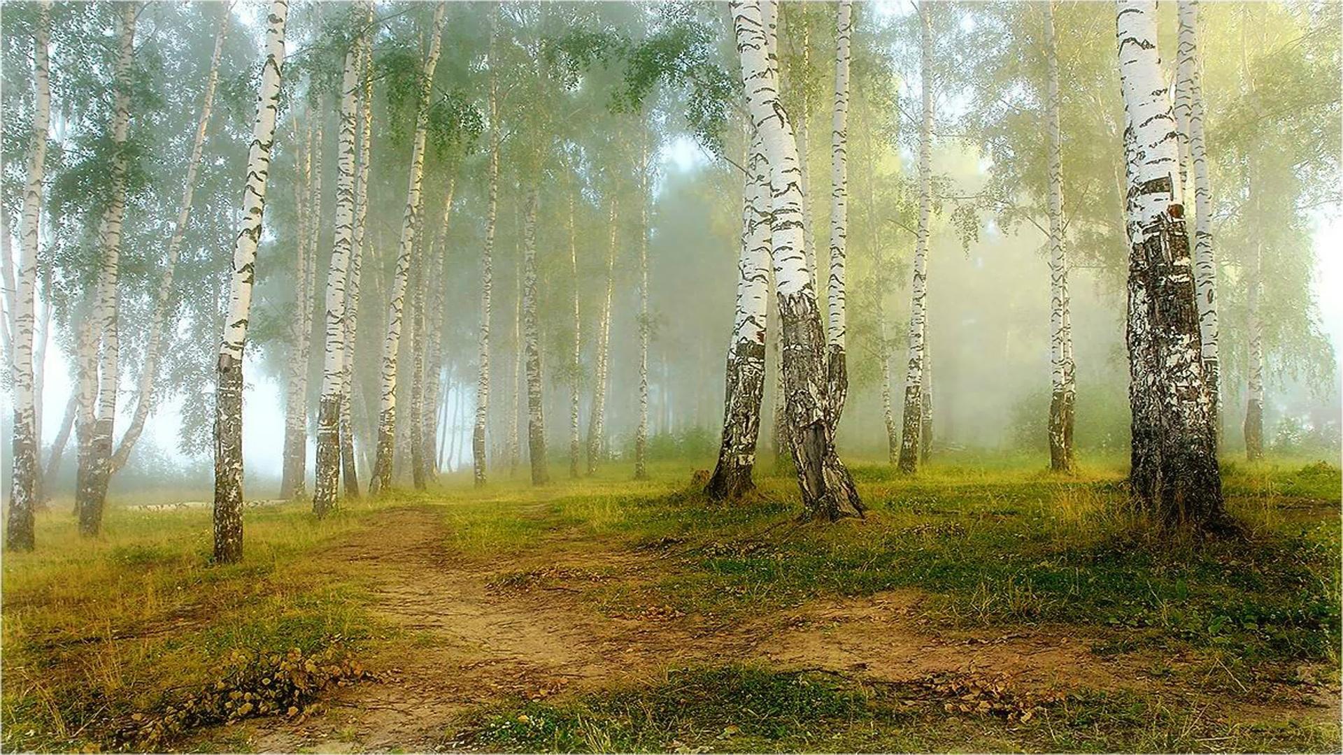 Анимированные открытки лес, открытки