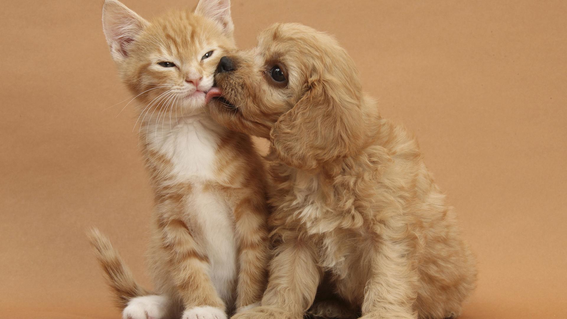 Смешные котята и щенки картинки