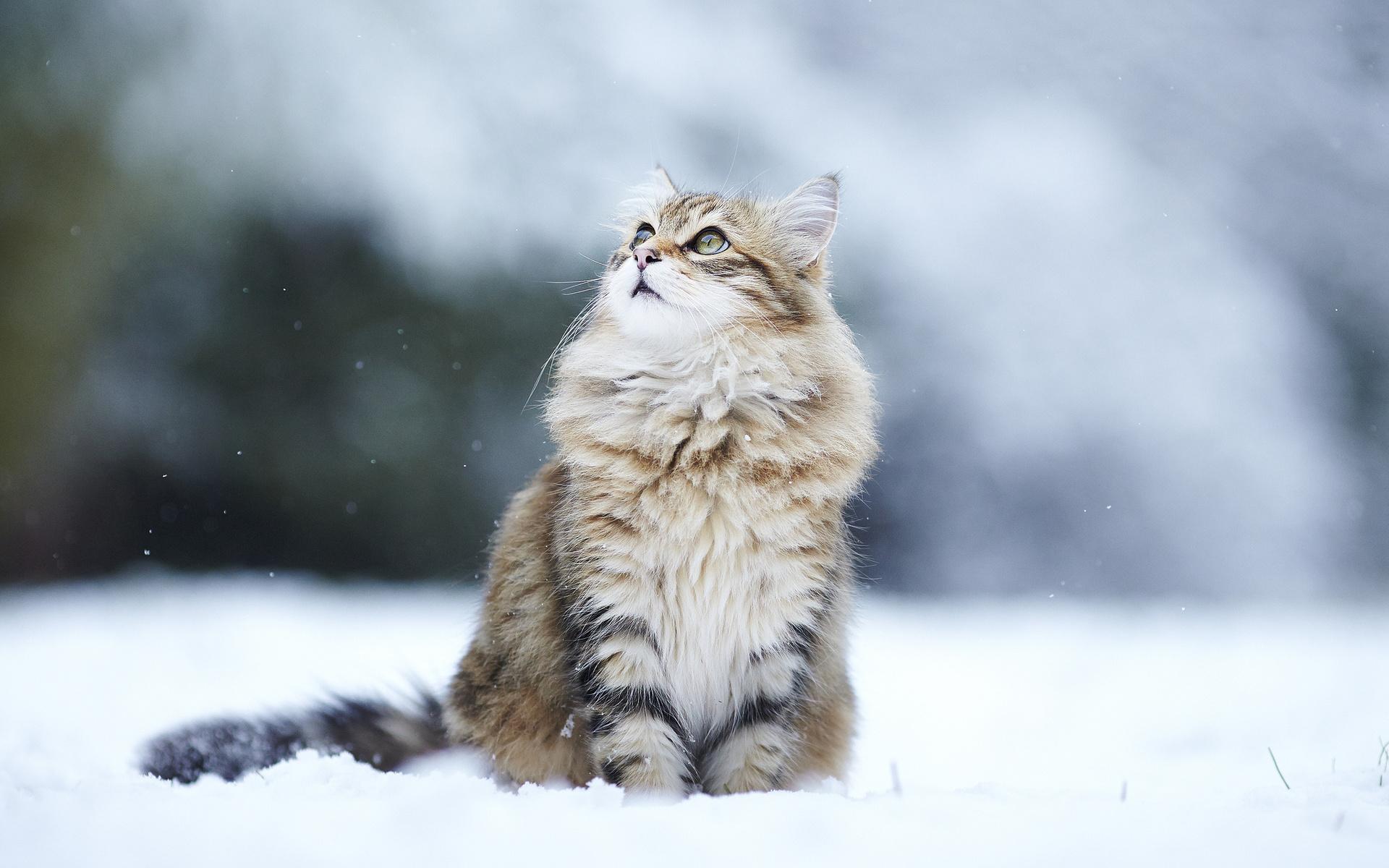 них картинки кошек зимние ней