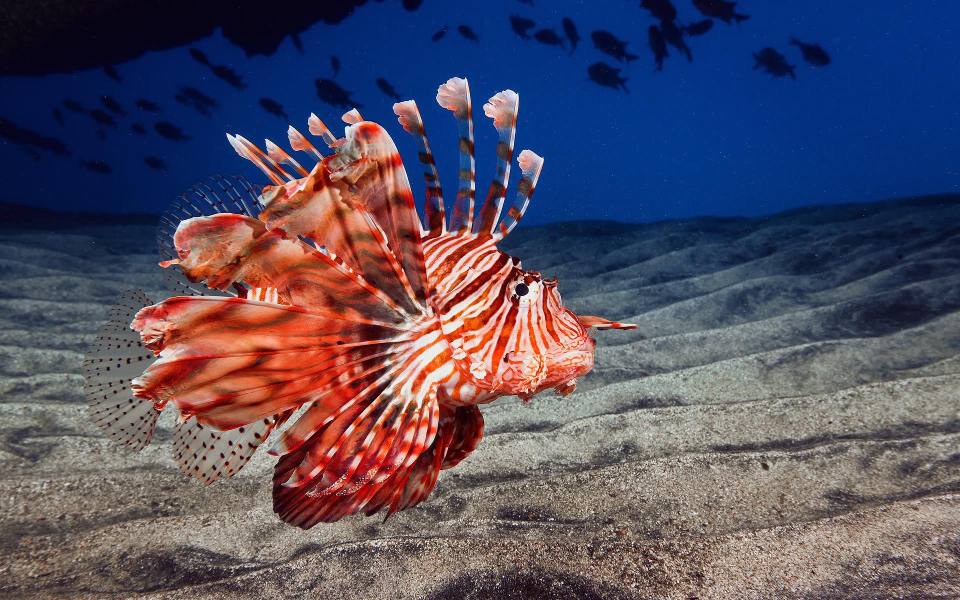необычные рыбы морей и океанов фото нами