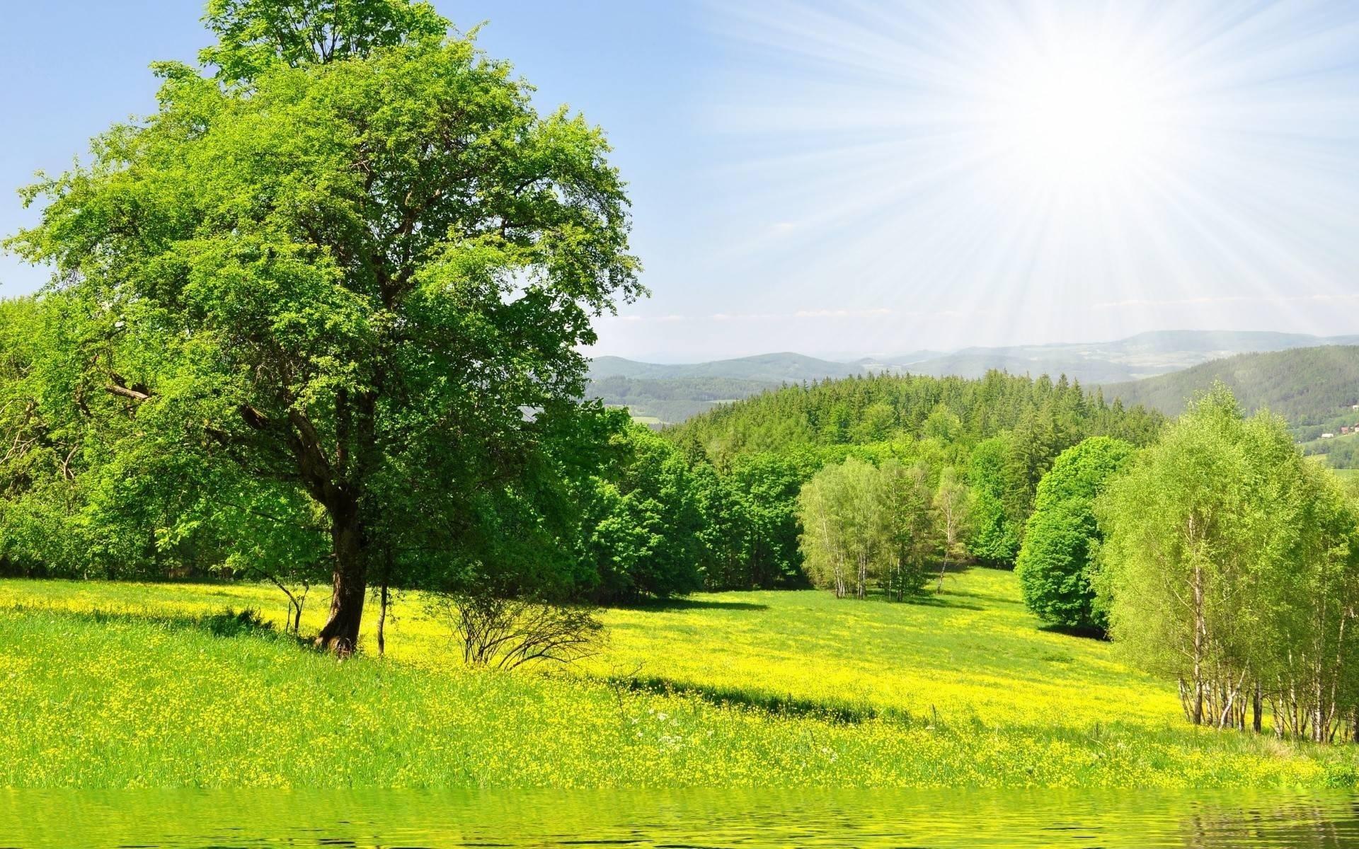 требует солнечное лето лес картинки пыталась скрыть украшение