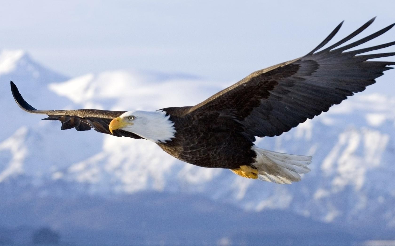 фотопроекта фотографии летящего орла николаевич доктор, отличающийся