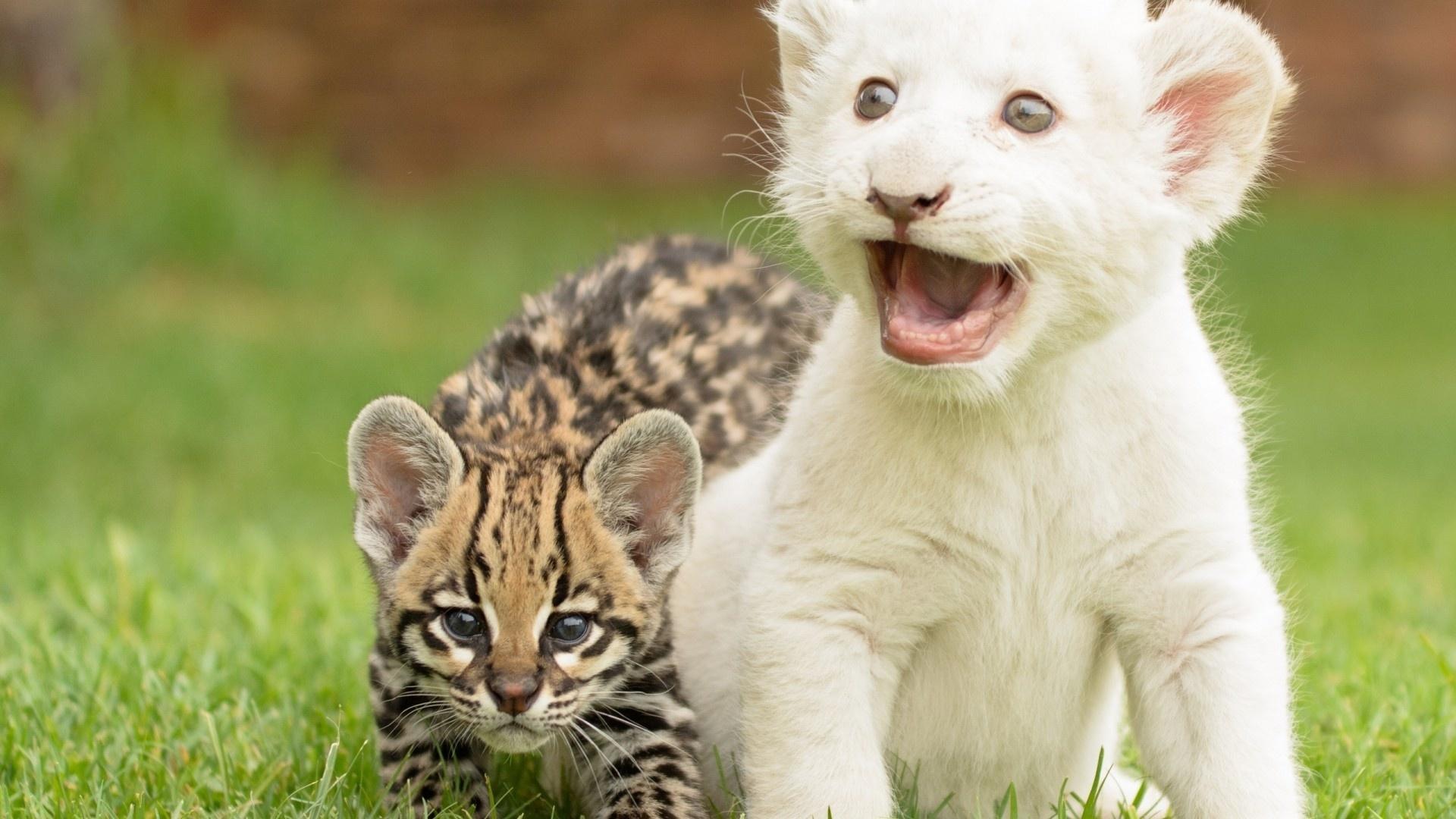 Картинки про детенышей животных