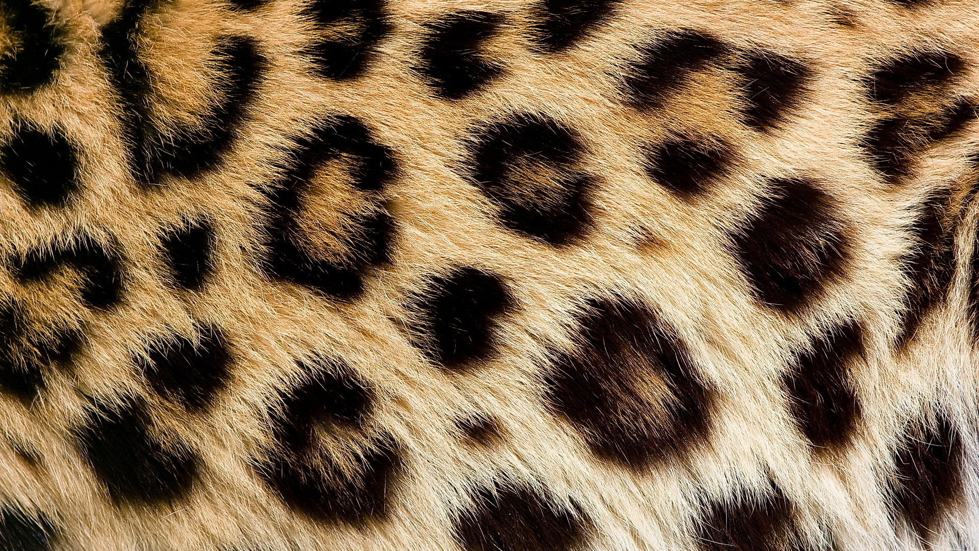 Картинка шерсть животных