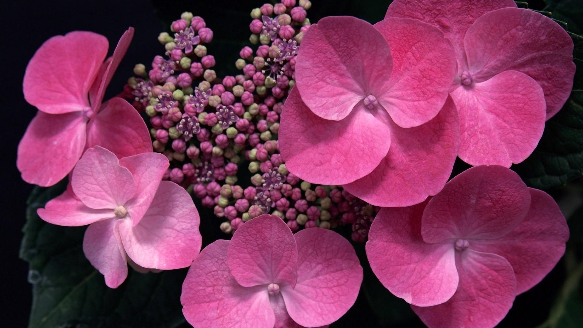 картинки с розовыми цветами того