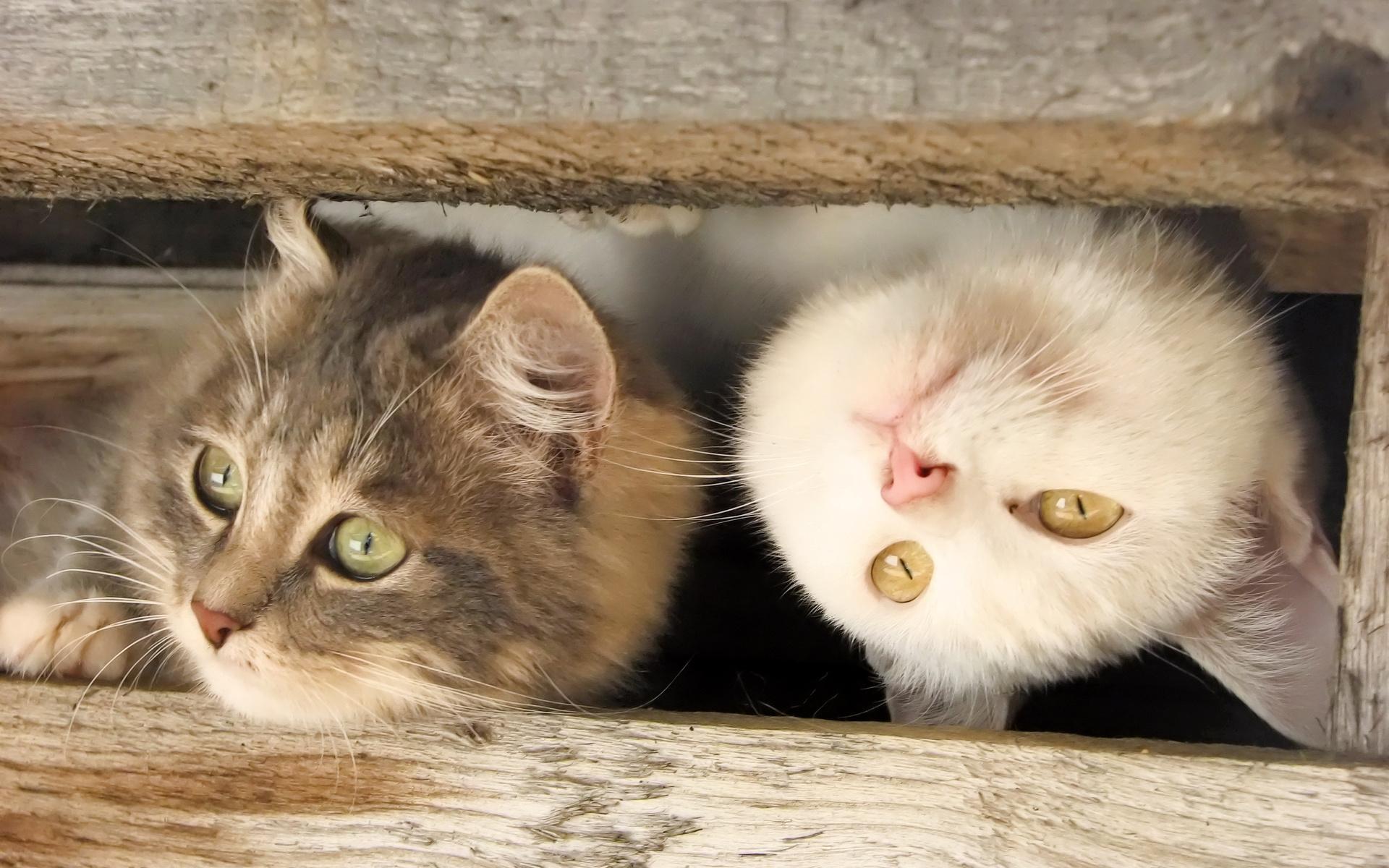 эти забавные коты картинки