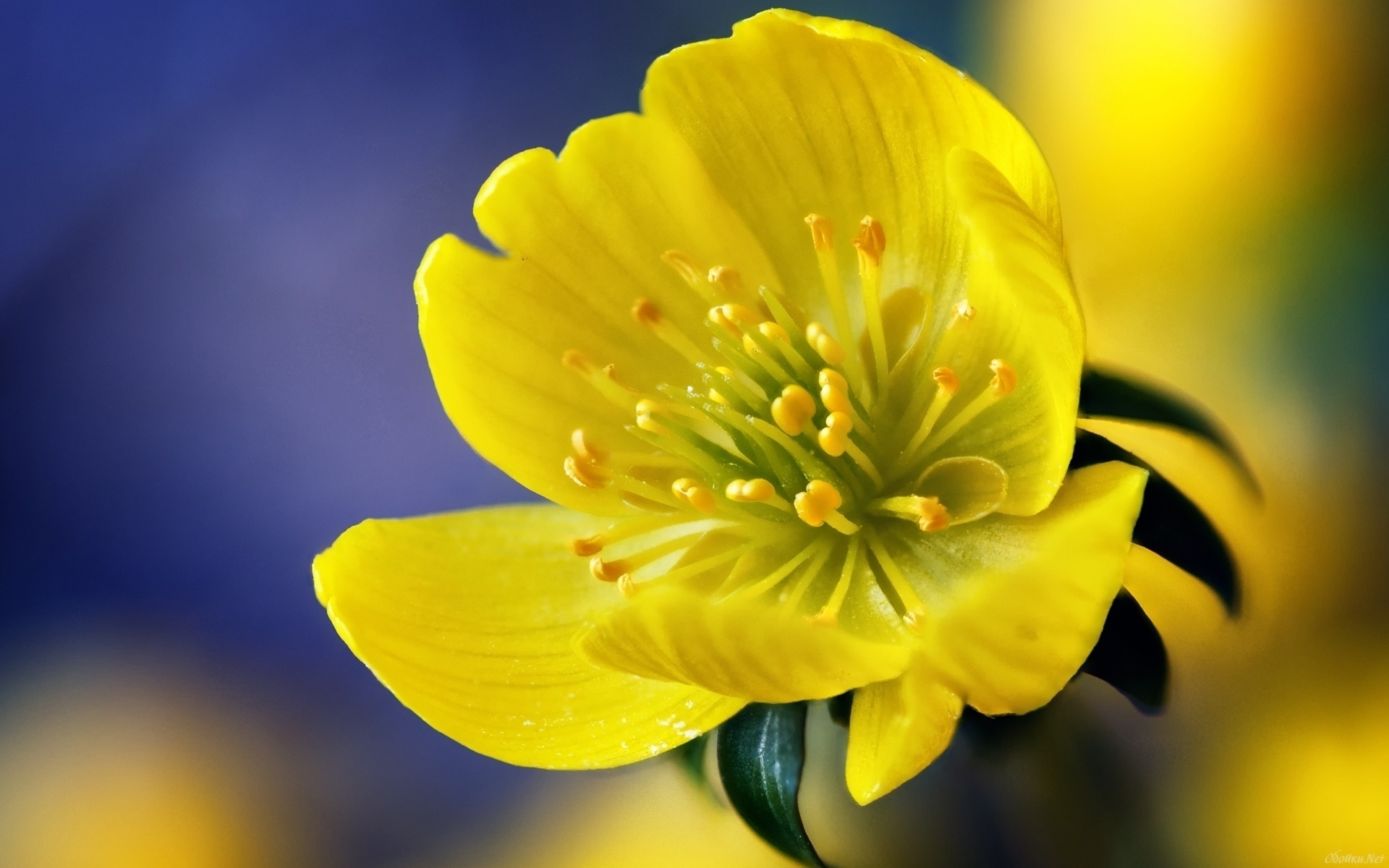 картинки с желтыми цветами имя аля