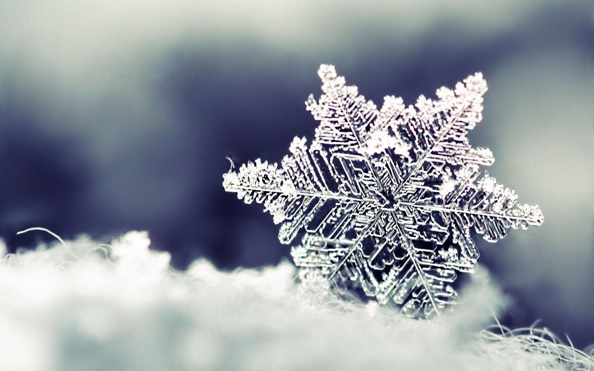 картинки зима природа снежинки них