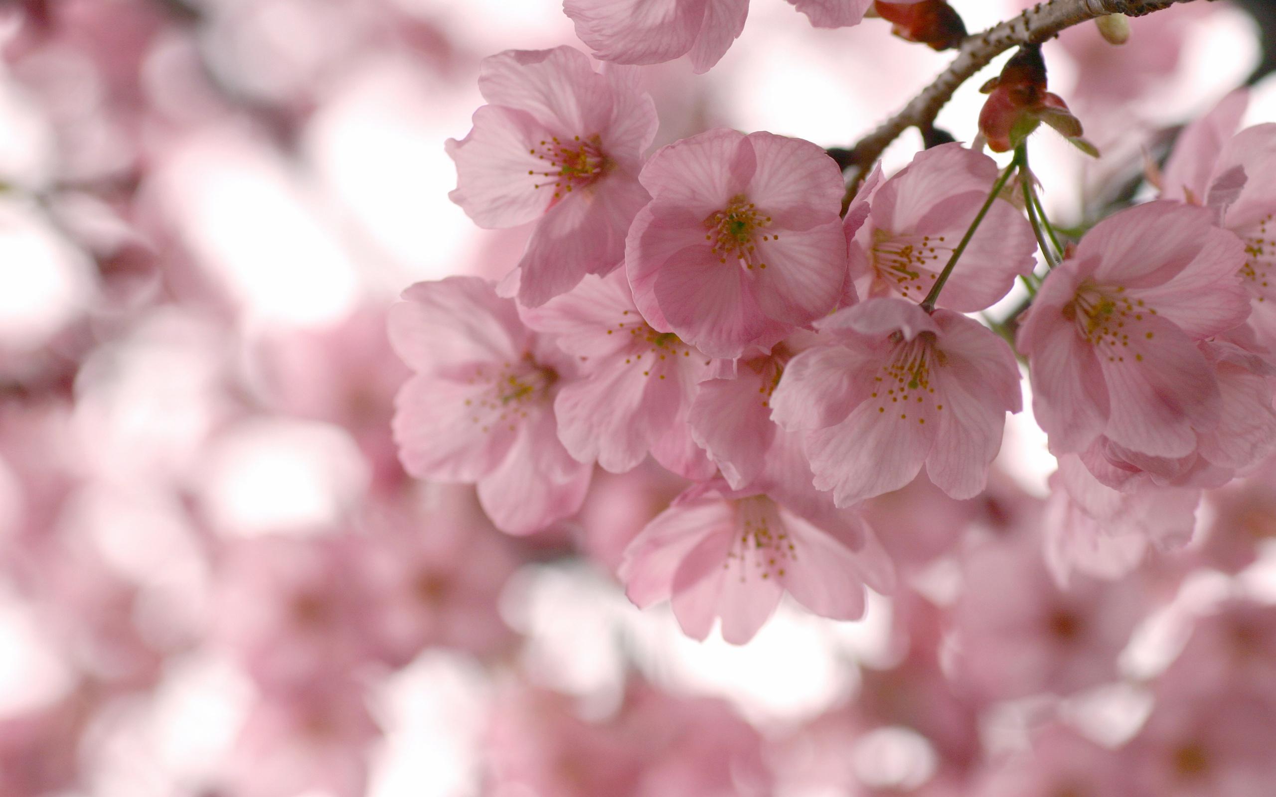 Цветы весна картинка