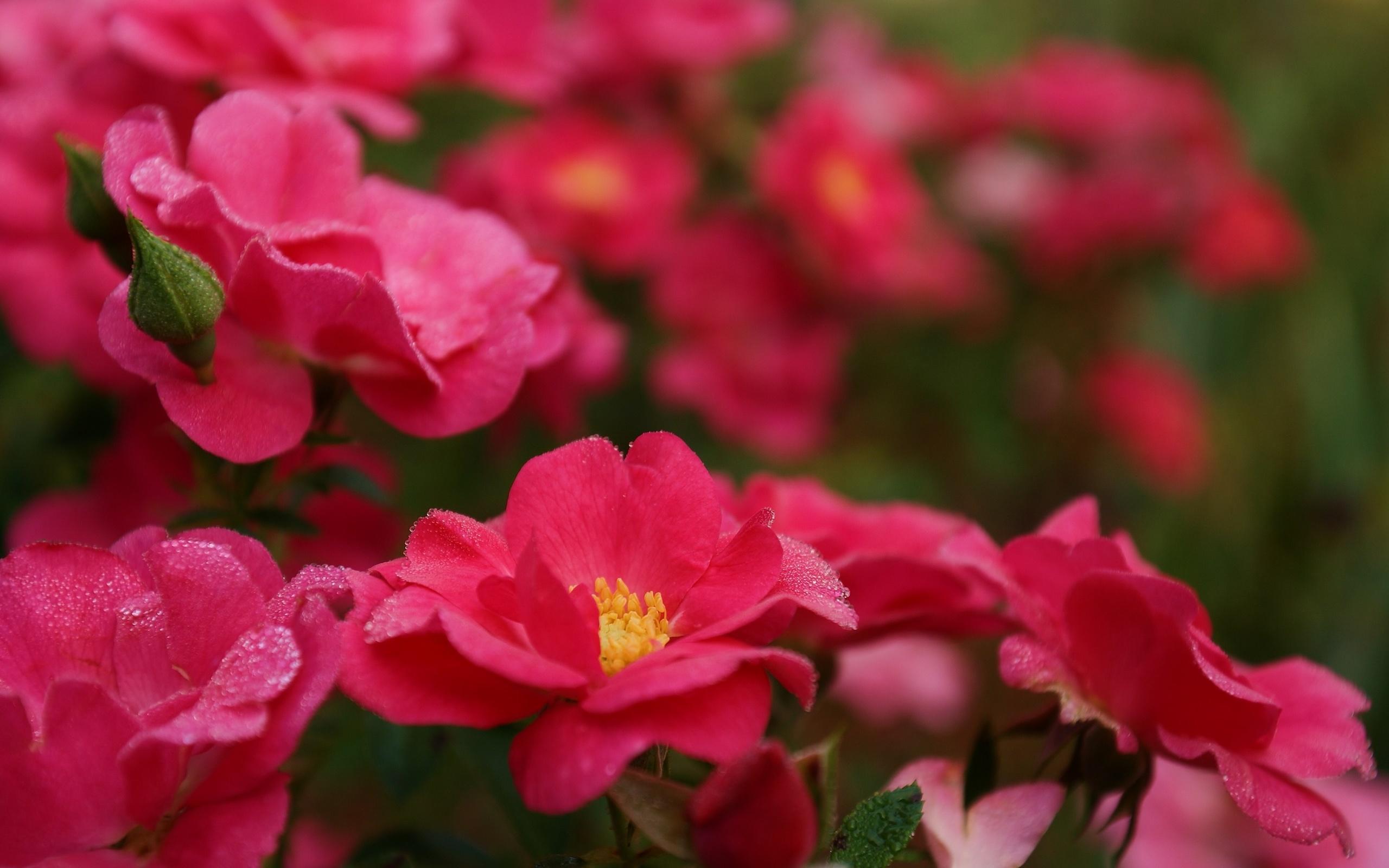 большие картинки про цветы