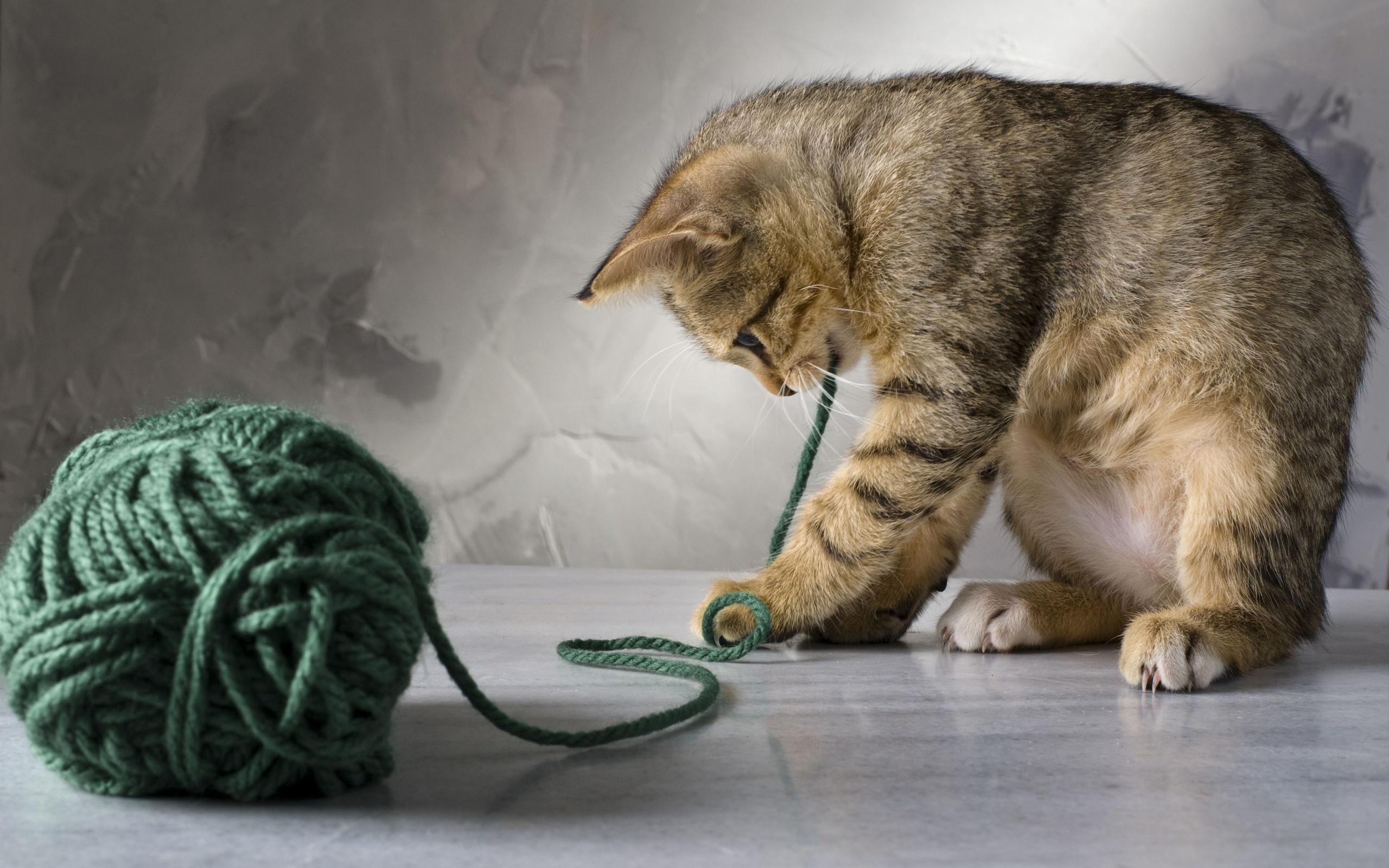 хайр картинки клубочки для котенка представляет собой несколько