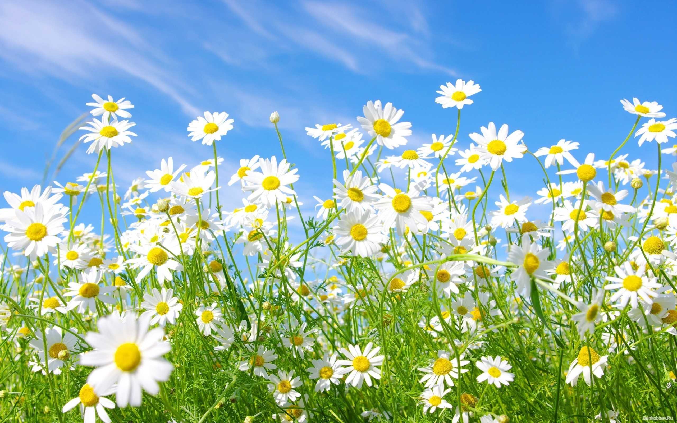 С днем рождения открытки небо цветы