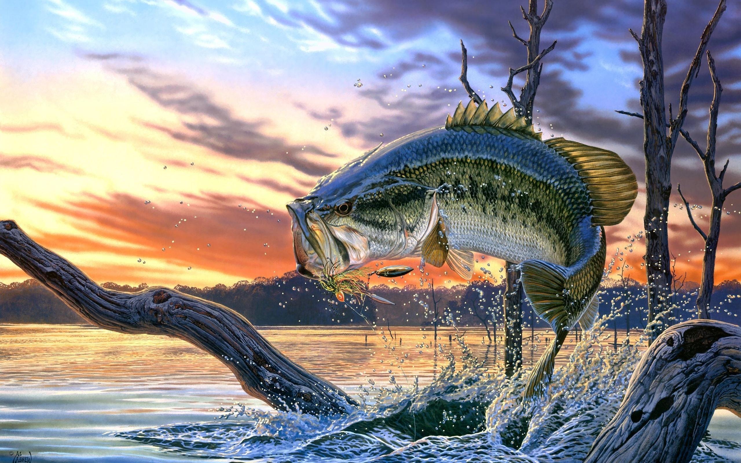 Картинки о рыбалки