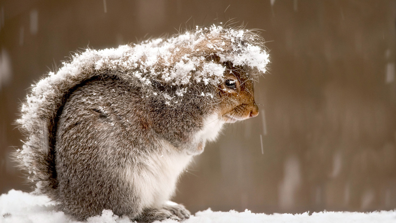 Днем рождения, прикольные картинки про зиму
