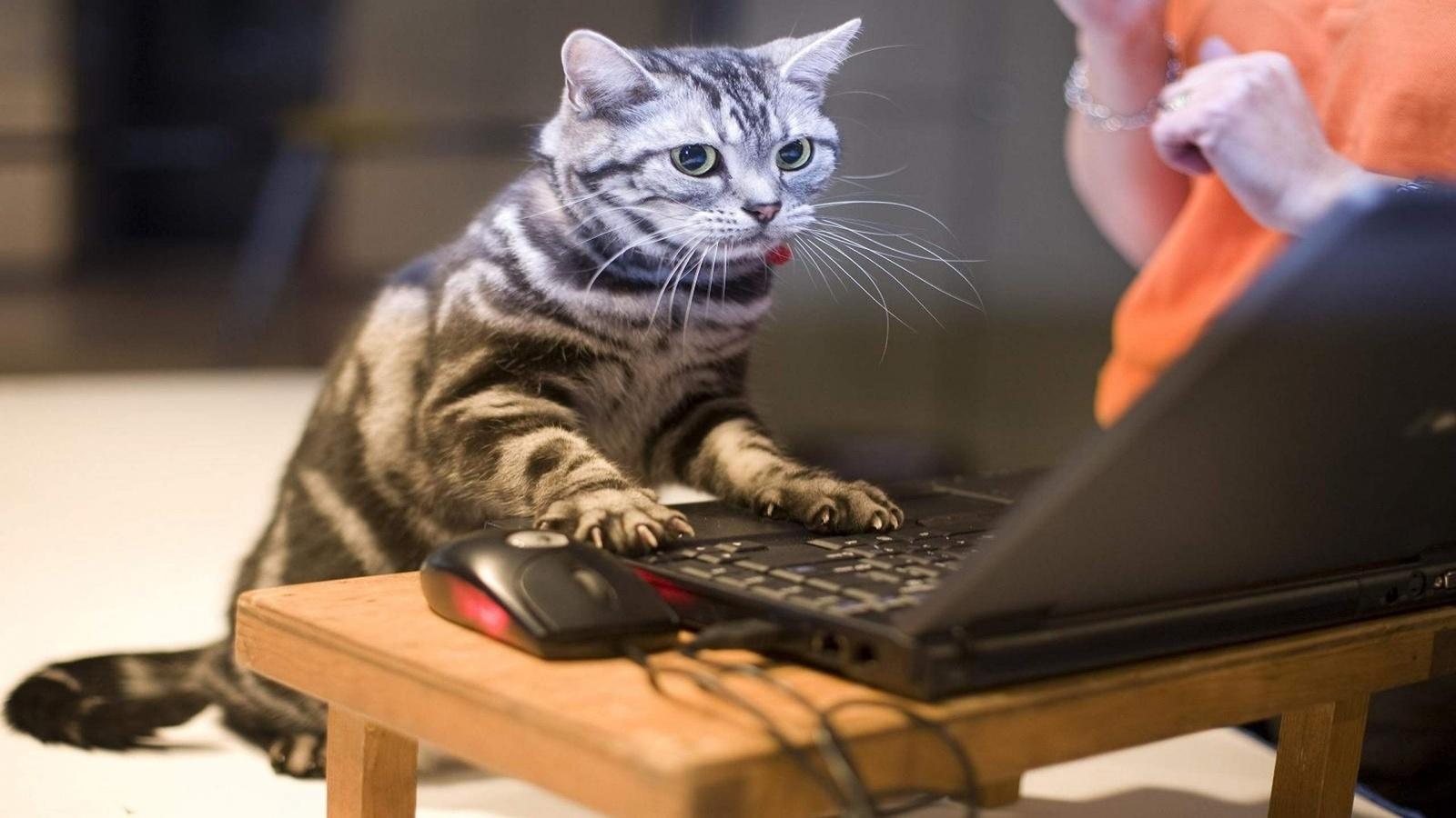 Прикольная картинка с ноутбуком