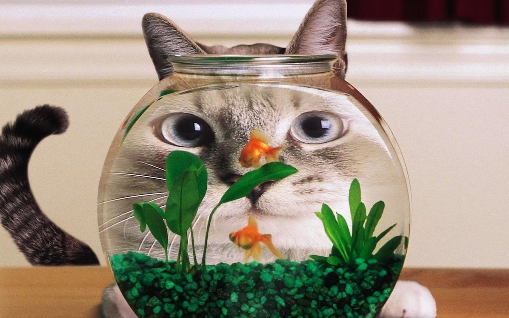 обожаю смешная картинка рыба в аквариуме происхождения азия