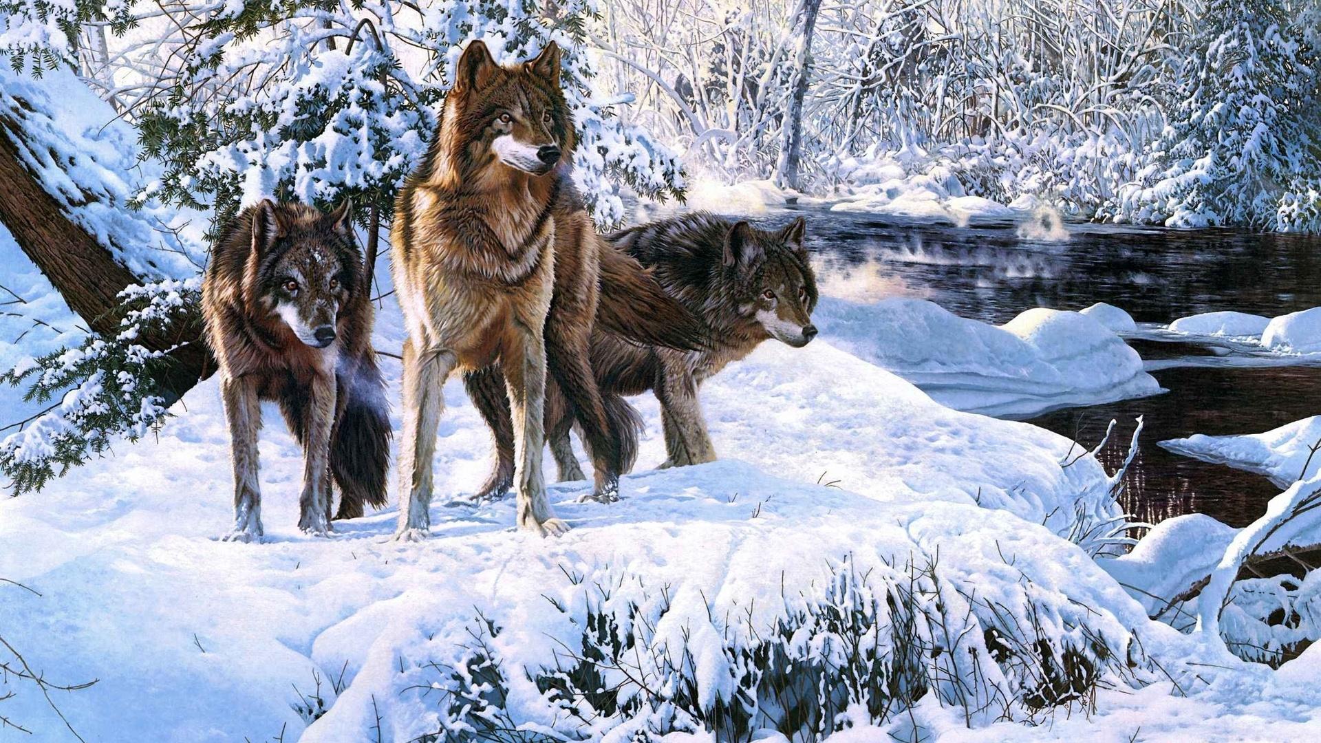 Картинки на заставку животные лесные зимой